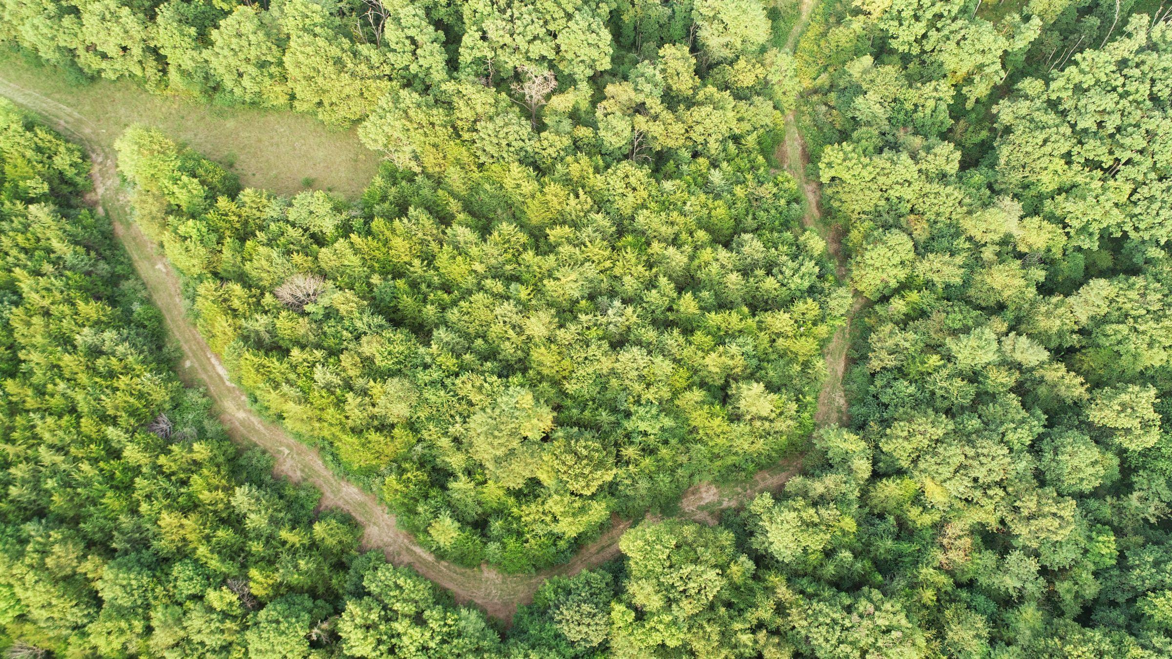 land-lee-county-iowa-328-acres-listing-number-15137-5-2020-08-27-175034.jpg
