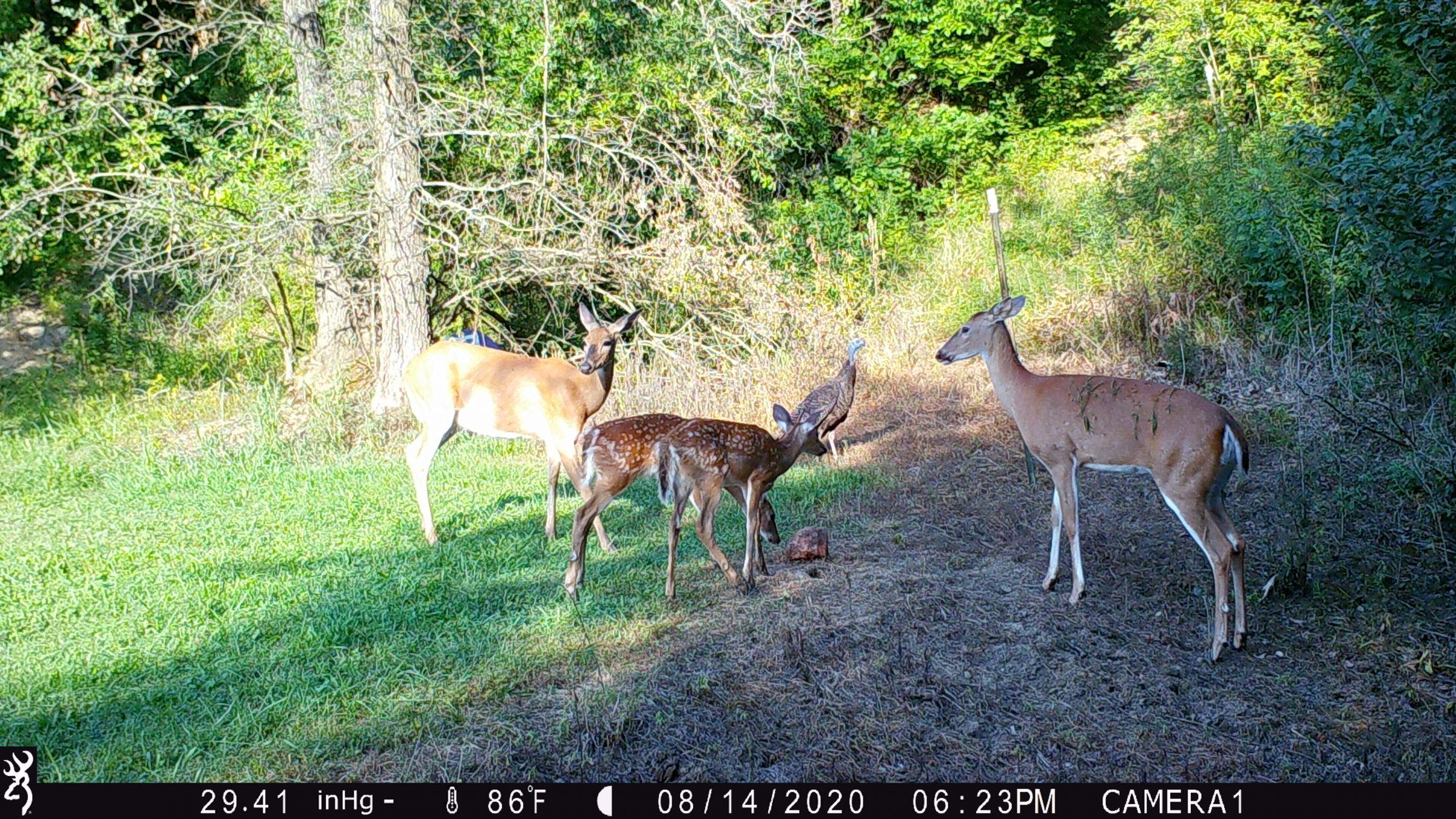 land-lee-county-iowa-328-acres-listing-number-15137-6-2020-08-27-175702.JPG