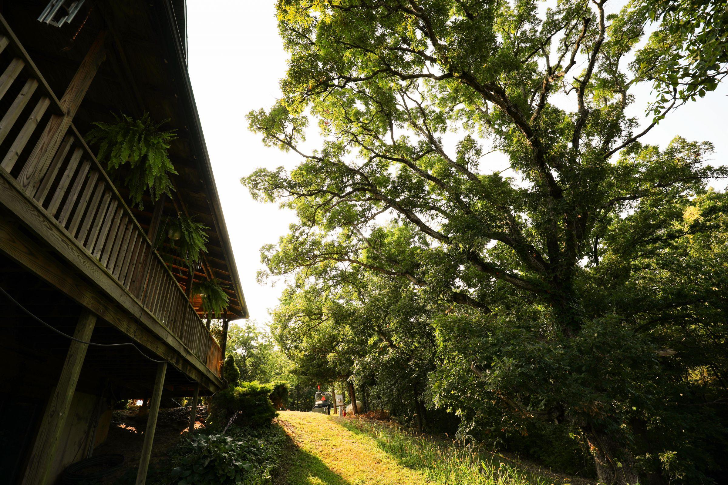 land-lee-county-iowa-328-acres-listing-number-15137-8-2020-08-27-174705.jpg