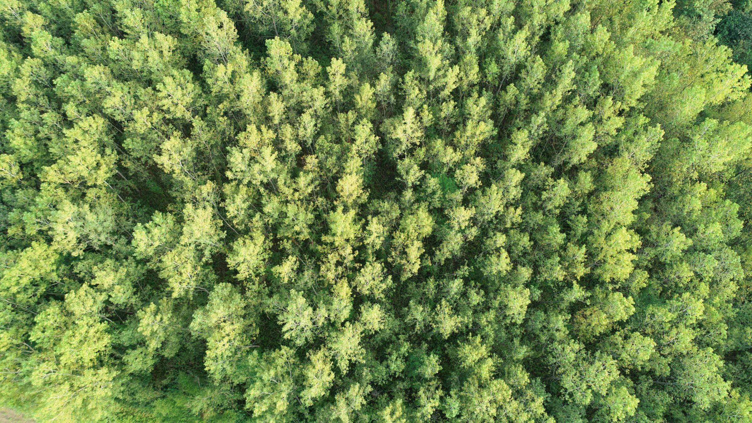 land-lee-county-iowa-328-acres-listing-number-15137-8-2020-08-27-175039.jpg