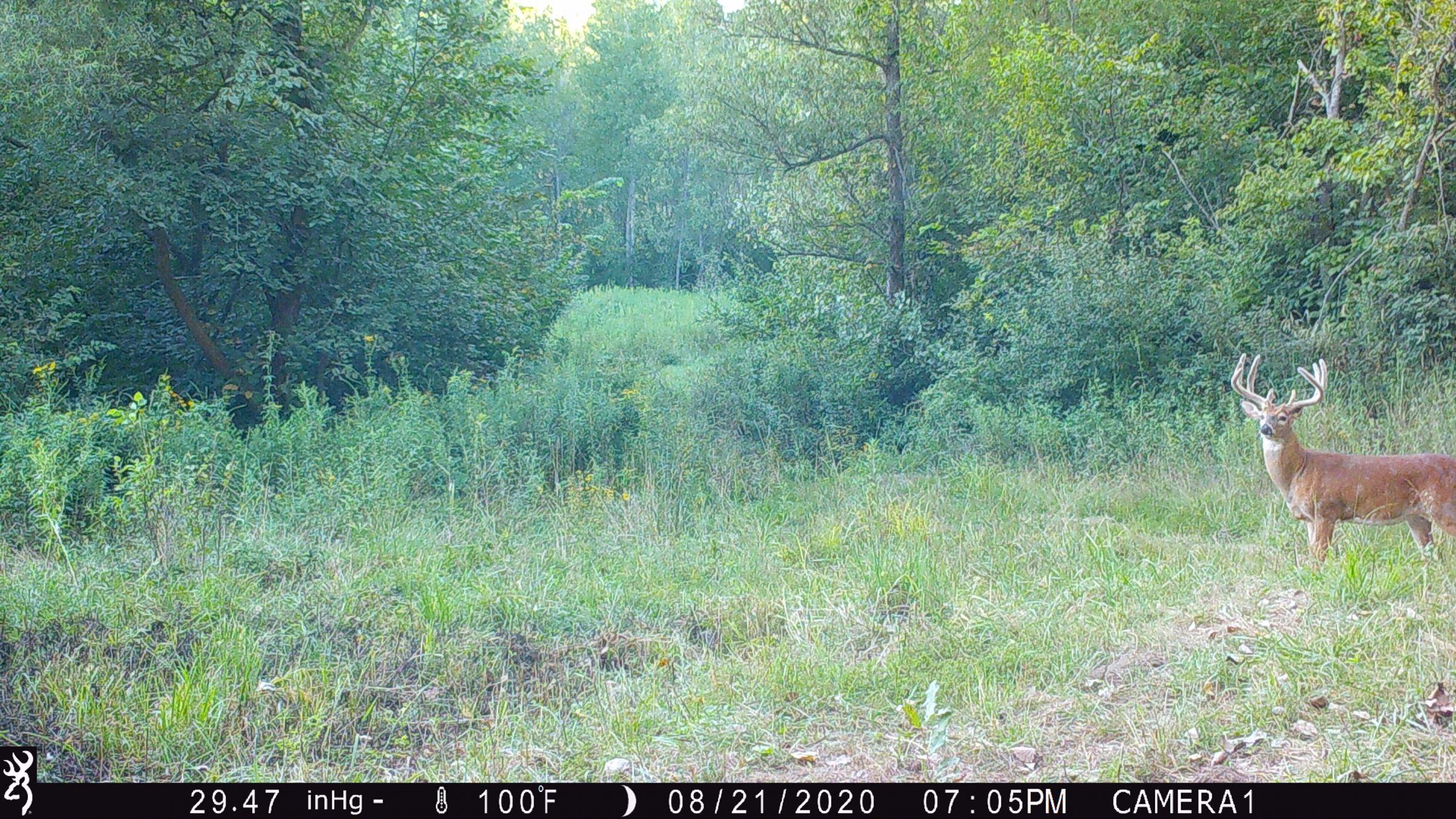 land-lee-county-iowa-328-acres-listing-number-15137-8-2020-08-27-175704.JPG