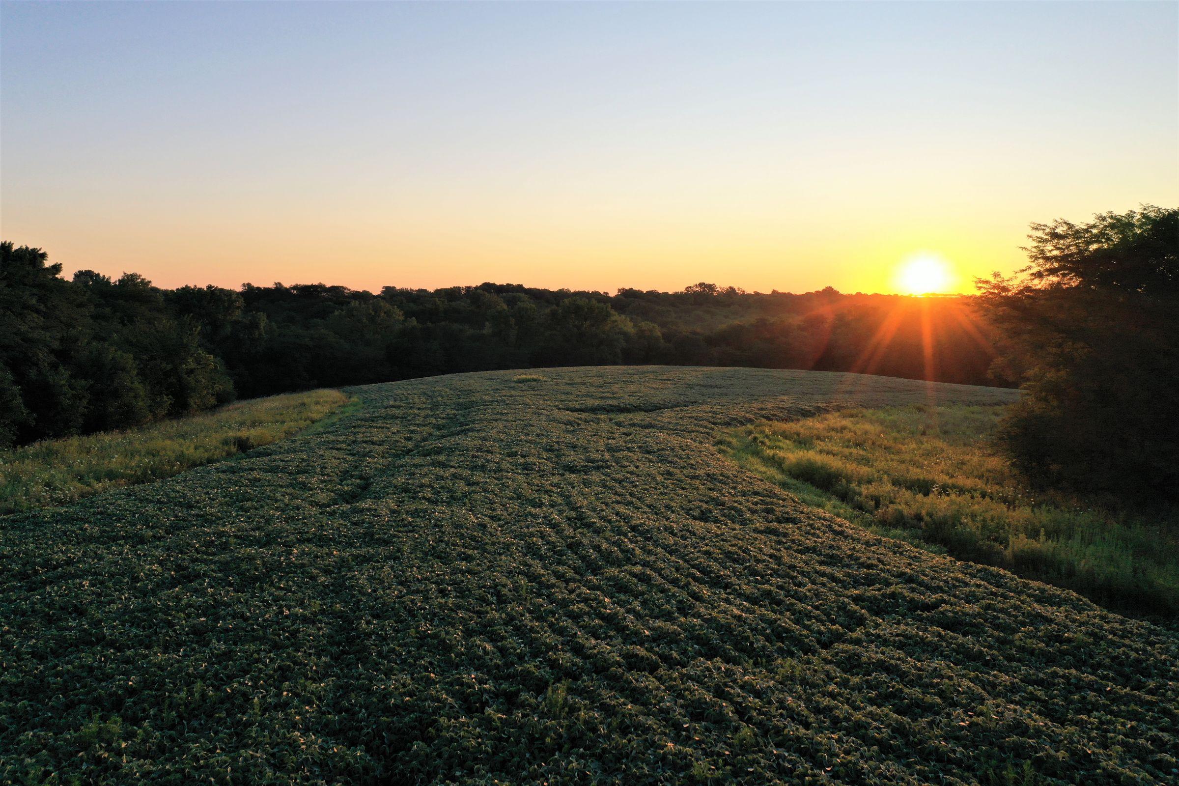 warren-county-iowa-40-acres-listing-number-15145-1-2020-08-28-144255.jpg