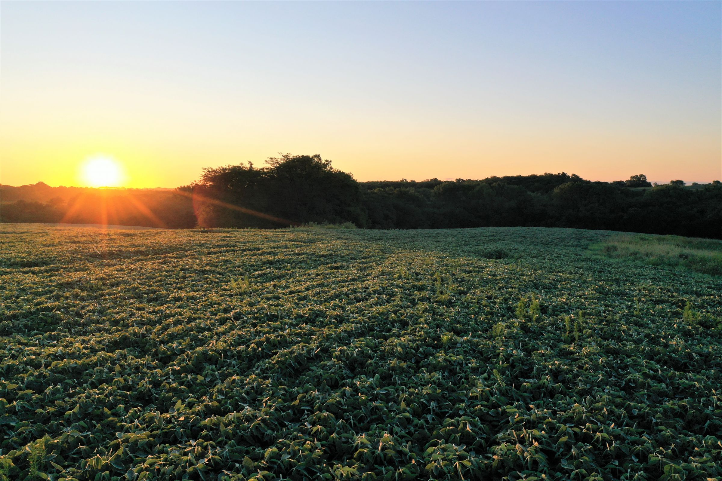 warren-county-iowa-40-acres-listing-number-15145-2-2020-08-28-144256.jpg