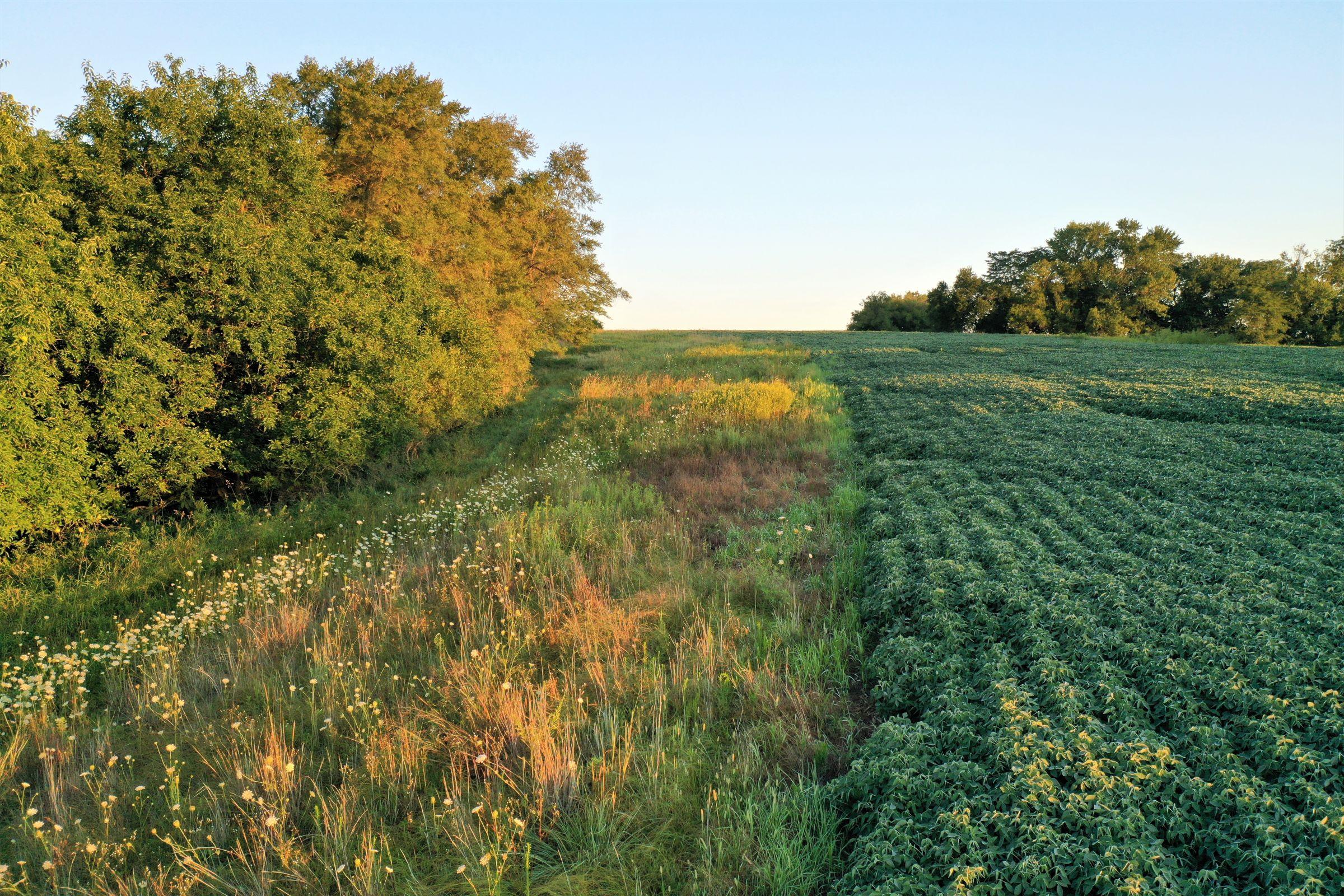 warren-county-iowa-40-acres-listing-number-15145-3-2020-08-28-144258.jpg