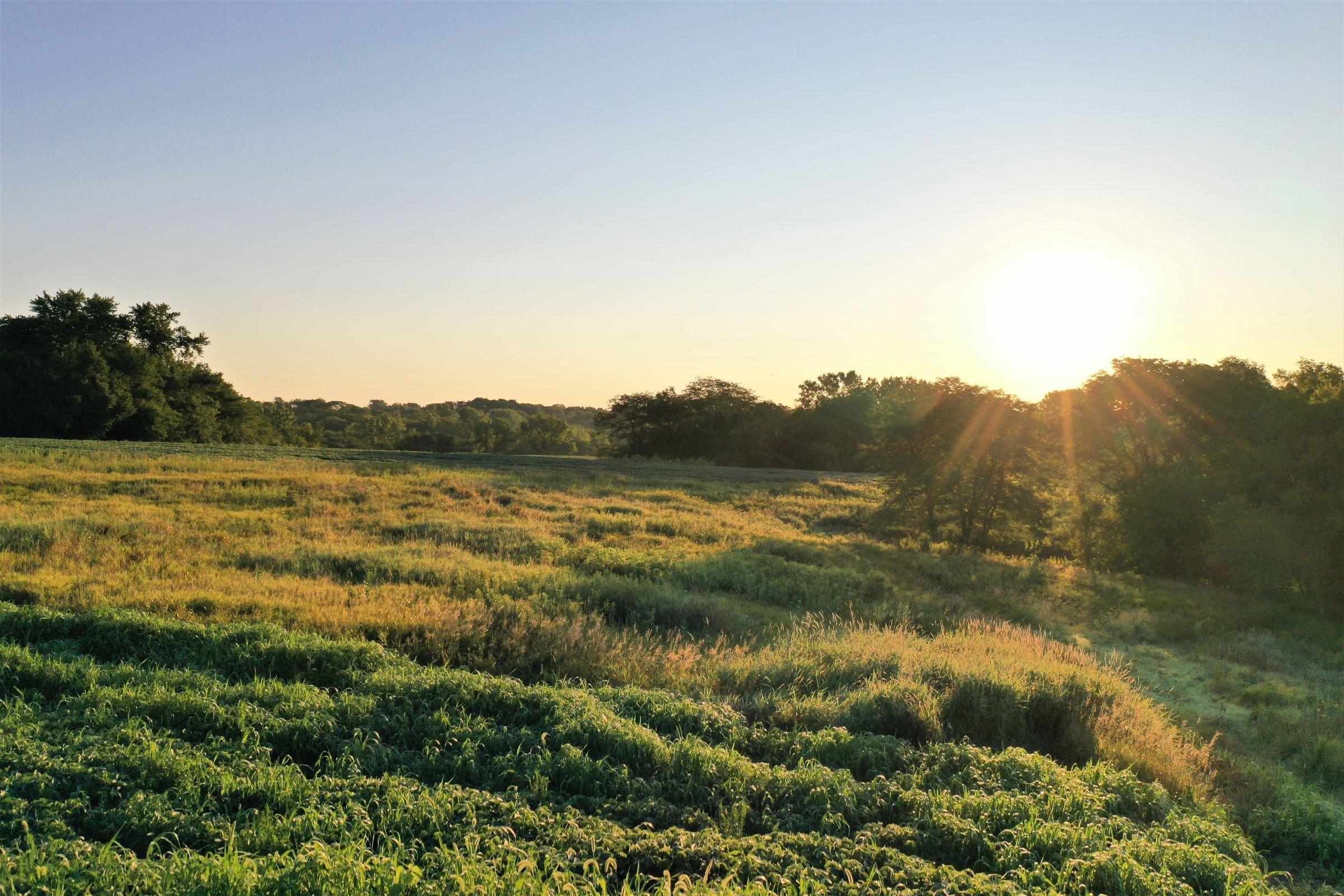 warren-county-iowa-40-acres-listing-number-15145-5-2020-08-28-144302.jpg