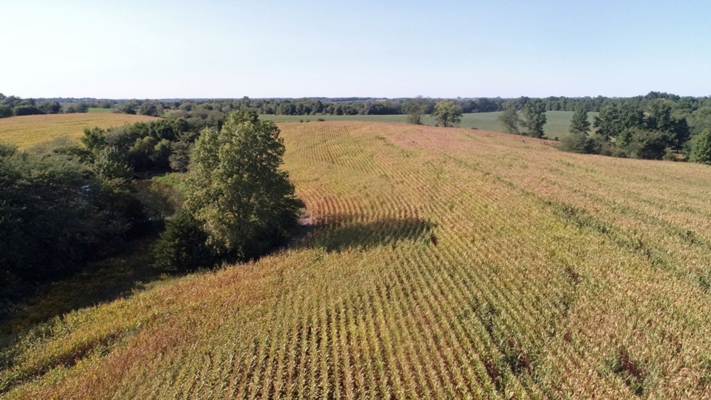 land-lucas-county-iowa-0-acres-listing-number-15164-4-2020-09-08-170337.JPG