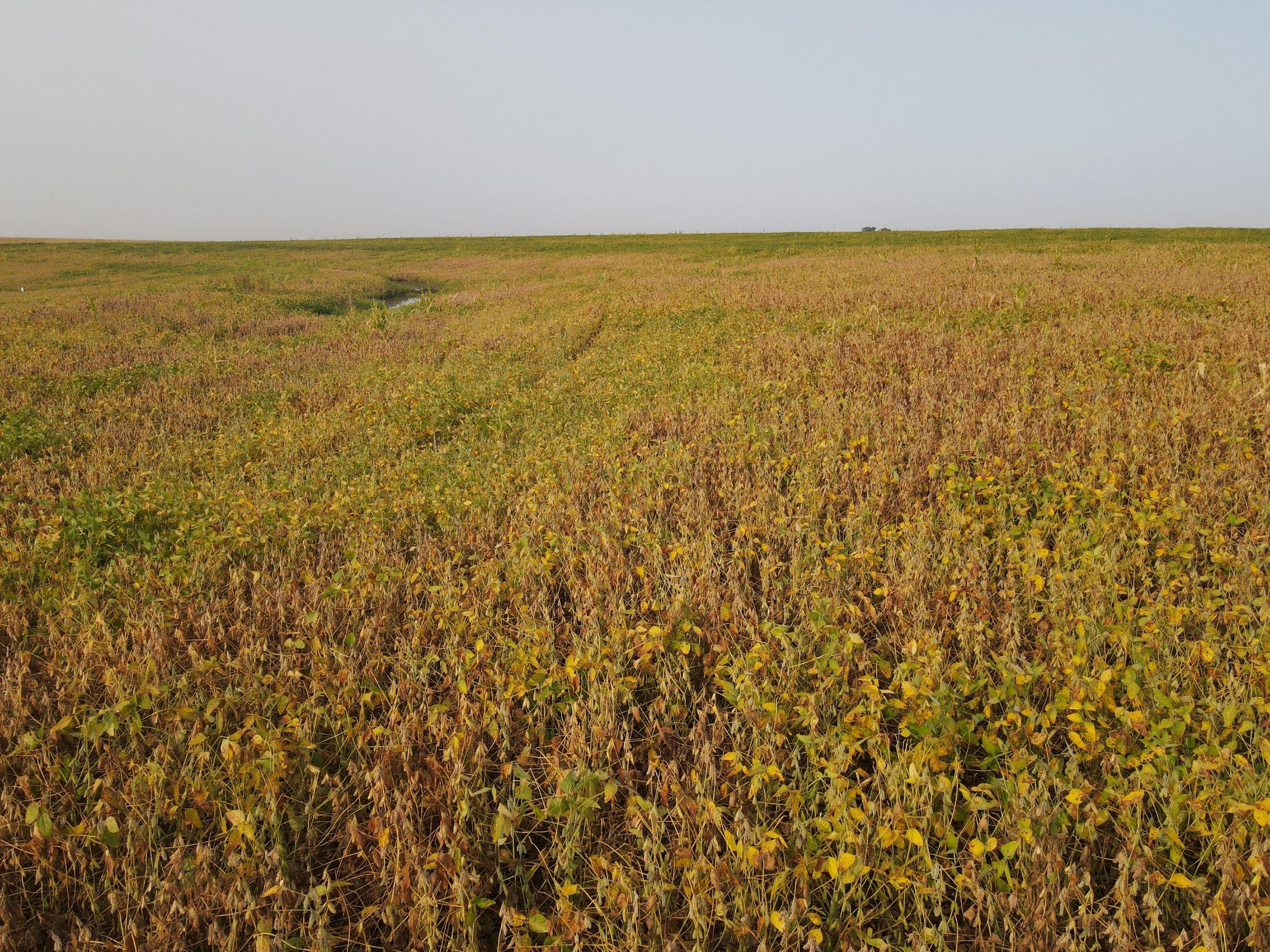 land-saline-county-nebraska-116-acres-listing-number-15166-0-2020-09-21-155107.JPG