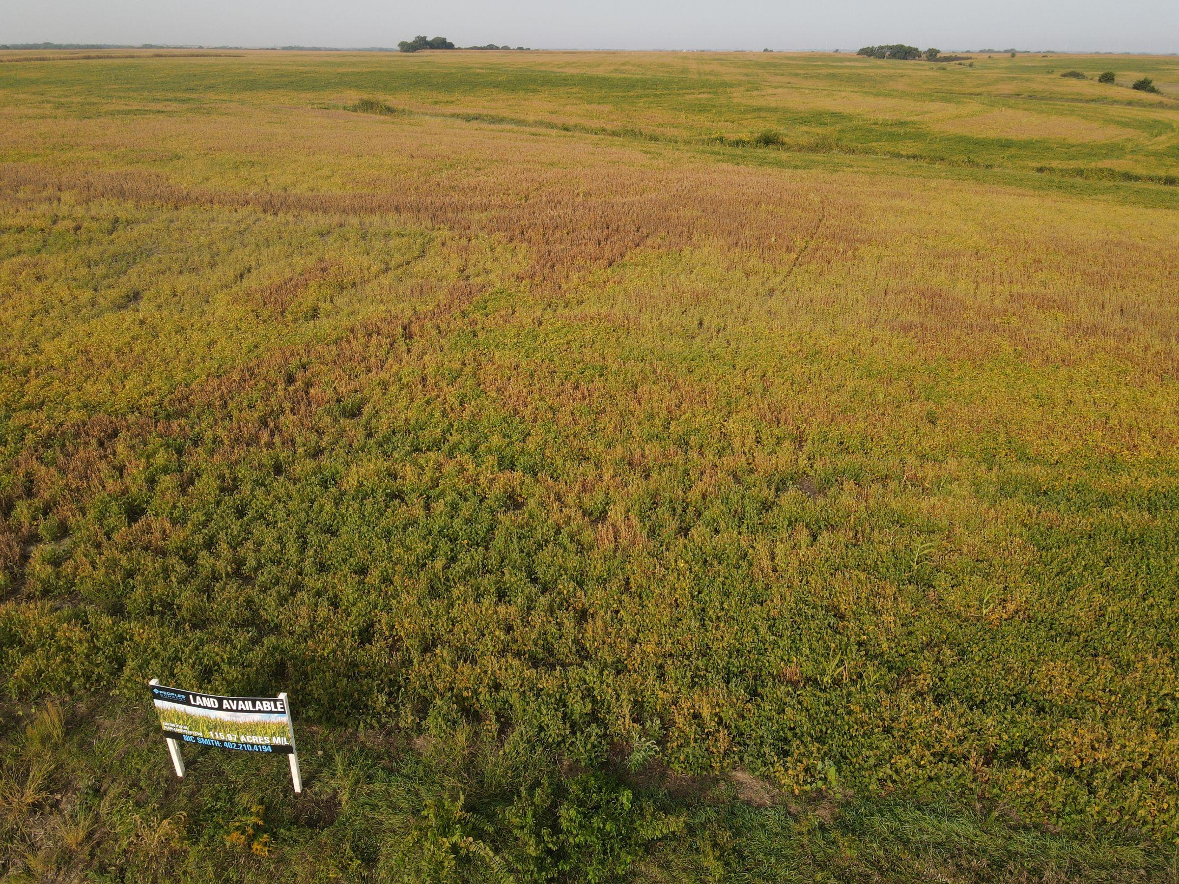 land-saline-county-nebraska-116-acres-listing-number-15166-0-2020-09-21-155728.JPG