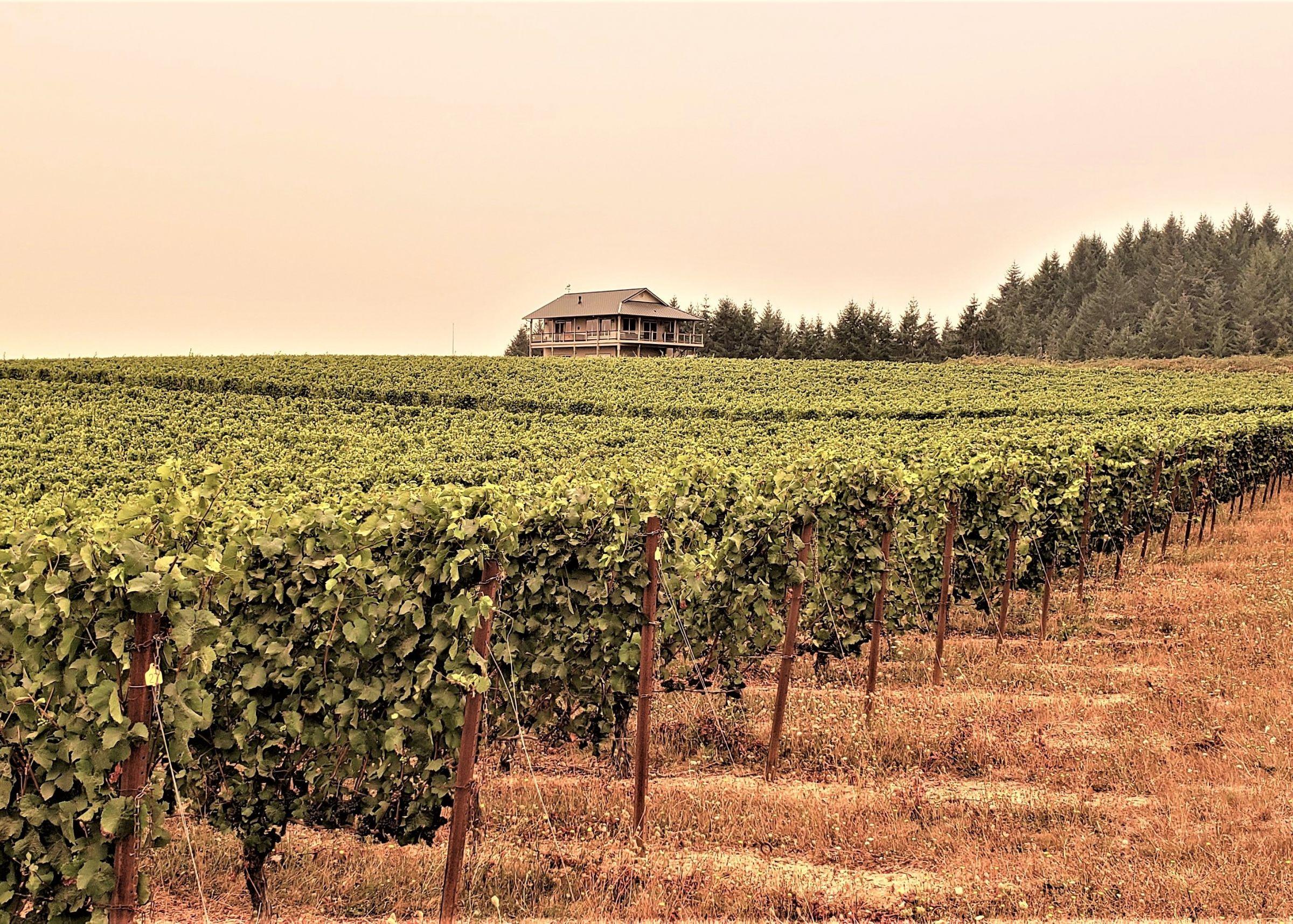 oregon-65-acres-listing-number-15179-0-2020-09-17-215314.jpg