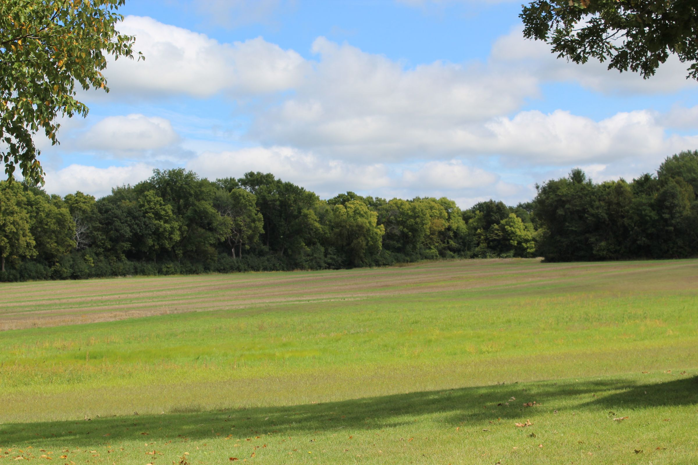 residential-land-mcleod-county-minnesota-80-acres-listing-number-15182-3-2020-09-23-163823.JPG