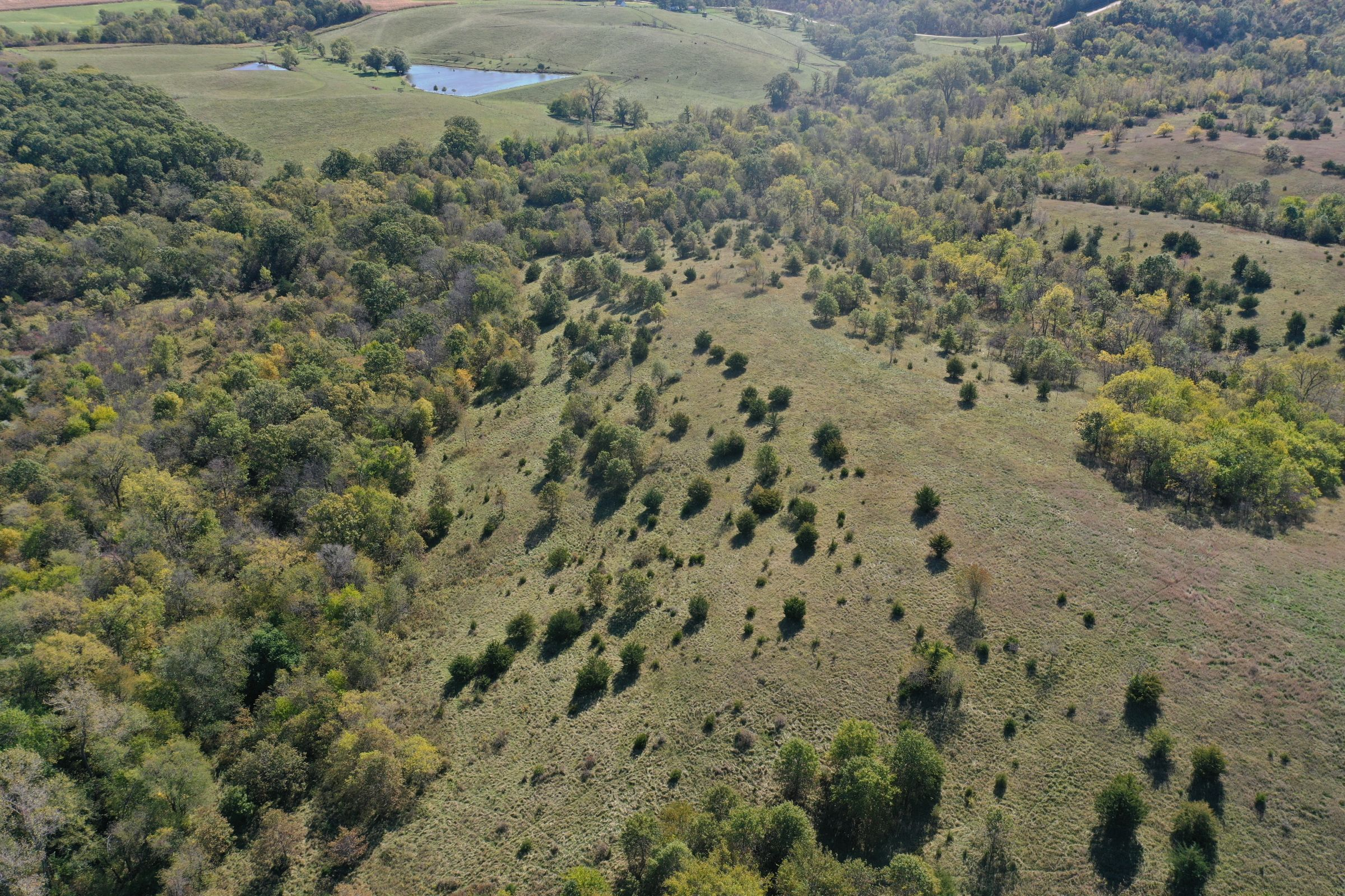 land-lucas-county-iowa-215-acres-listing-number-15206-1-2020-10-09-161120.jpg