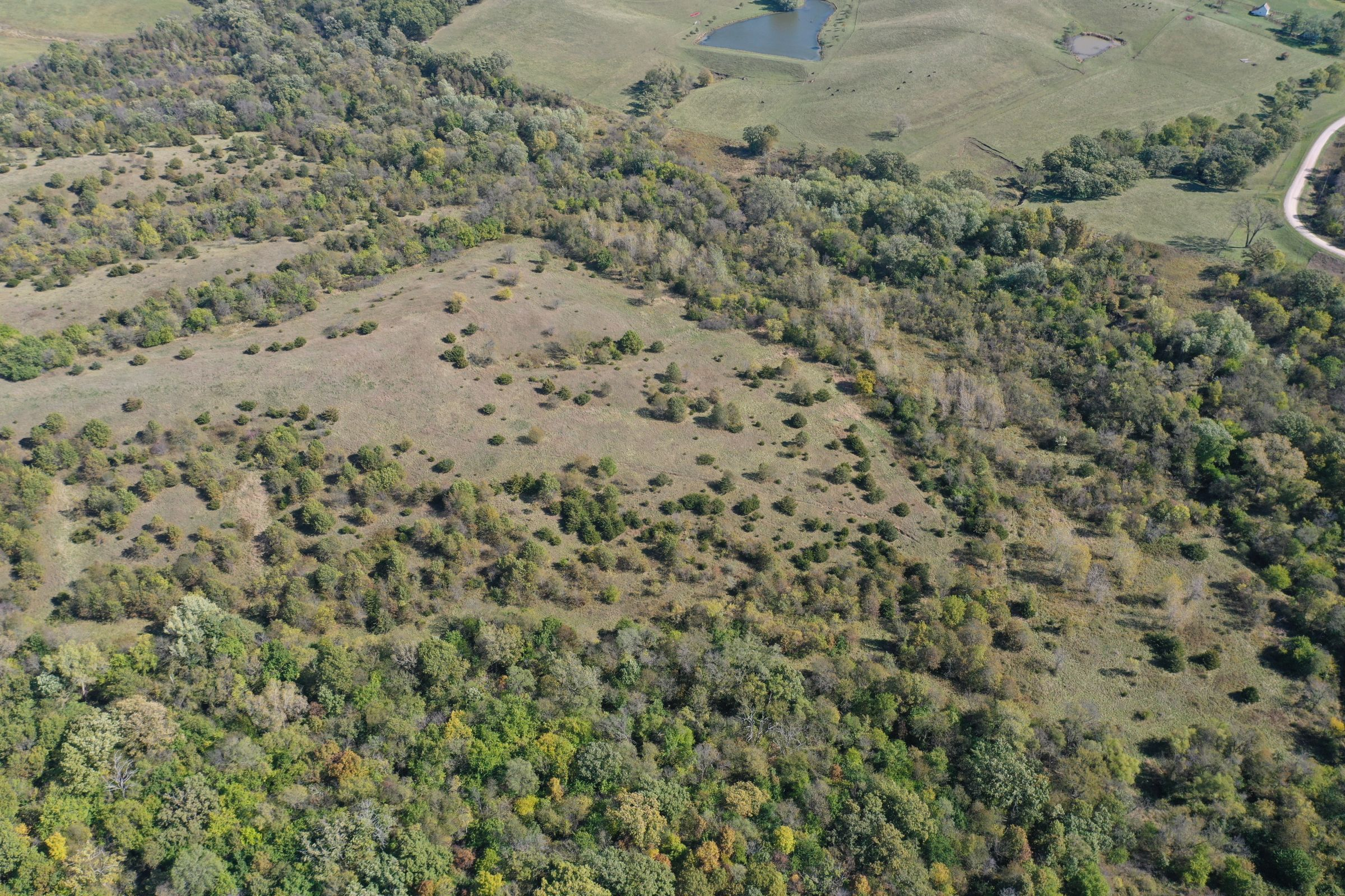land-lucas-county-iowa-215-acres-listing-number-15206-2-2020-10-09-163812.jpg