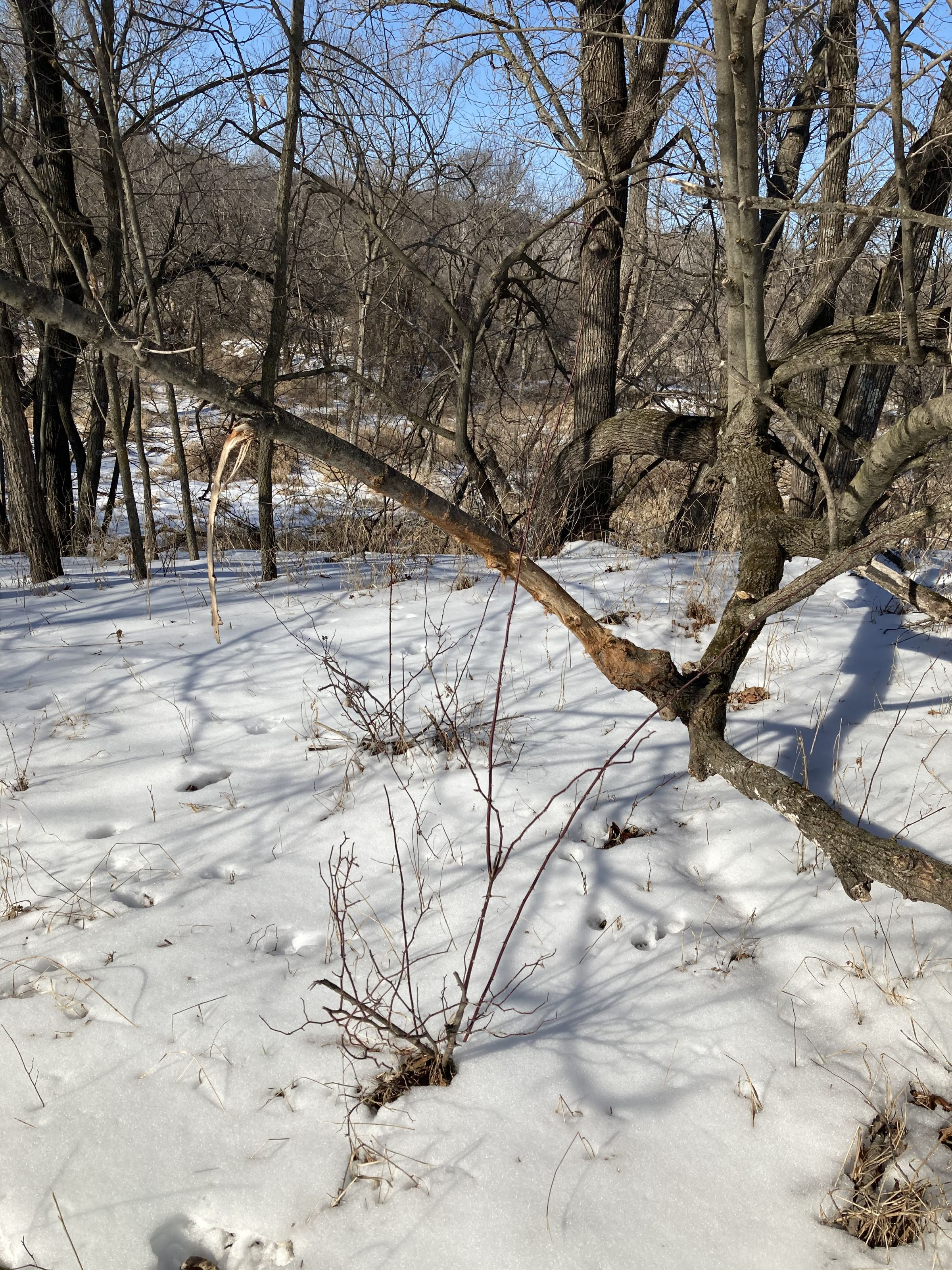 land-lucas-county-iowa-218-acres-listing-number-15206-0-2021-01-13-192036.JPG
