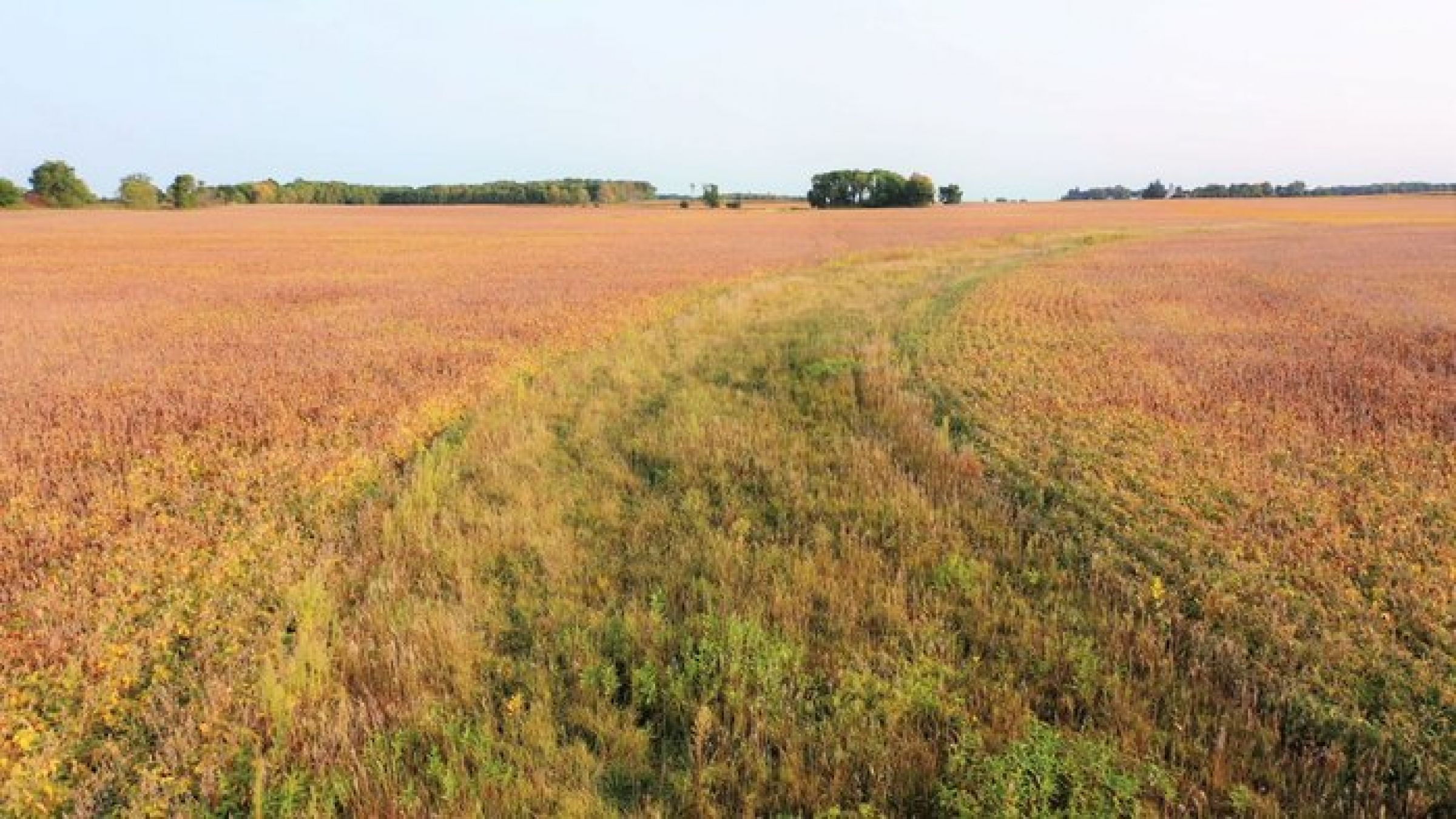 mitchell-county-iowa-113-acres-listing-number-15222-0-2020-10-19-190025.