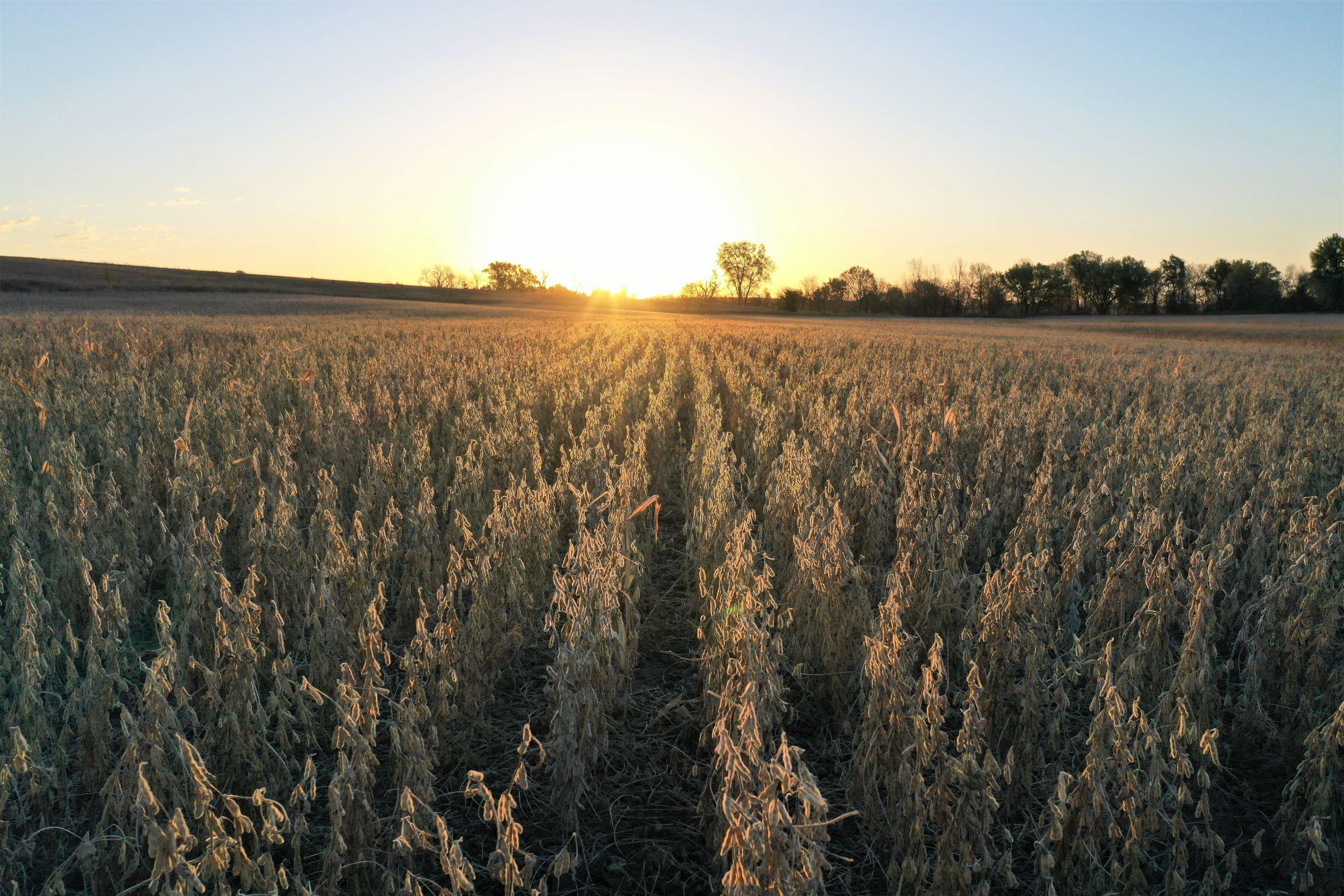 land-warren-county-iowa-81-acres-listing-number-15226-1-2020-10-27-161640.jpg