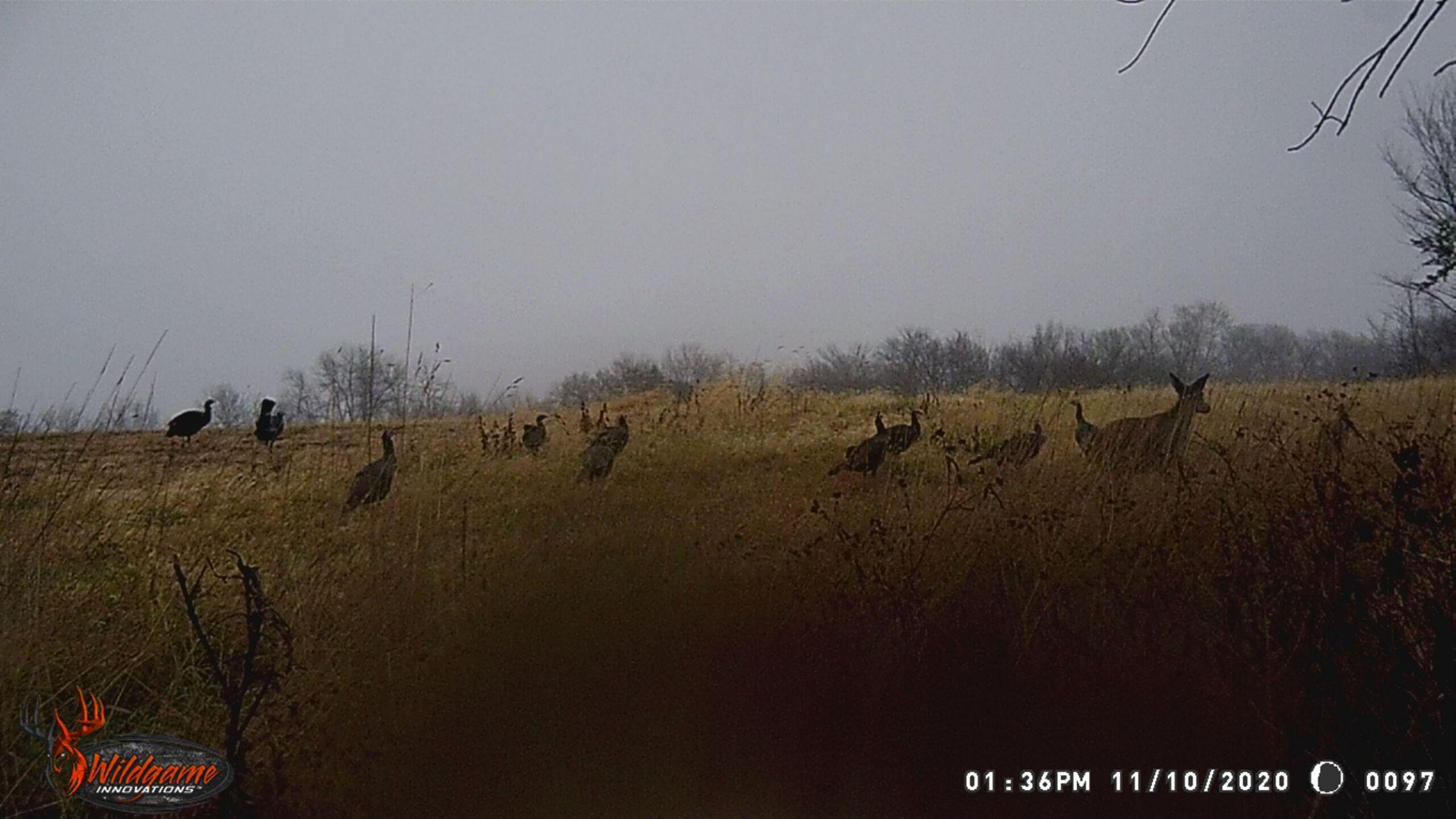 land-warren-county-iowa-63-acres-listing-number-15253-0-2020-11-17-170007.jpg