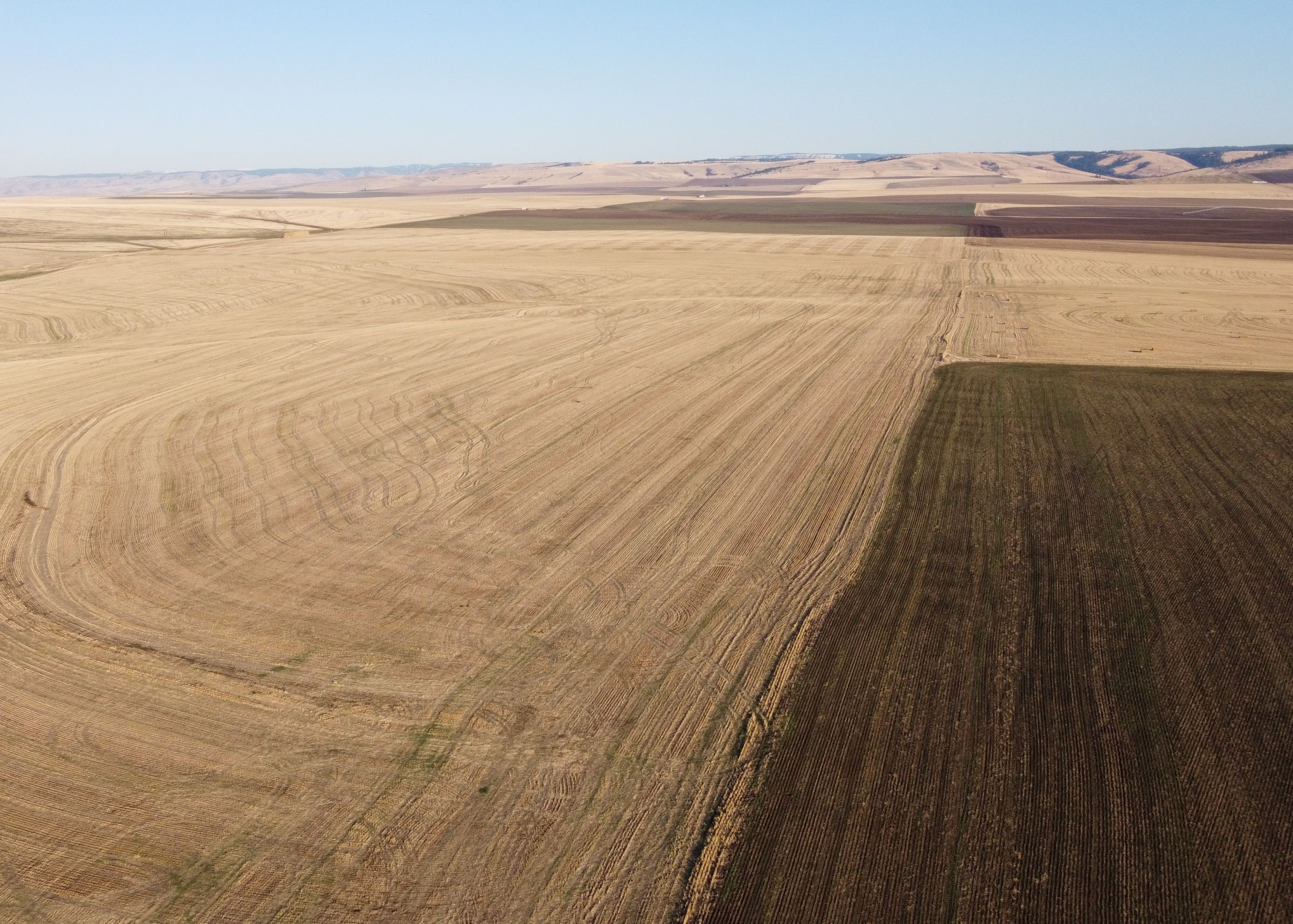 Oregon Wheat Farm