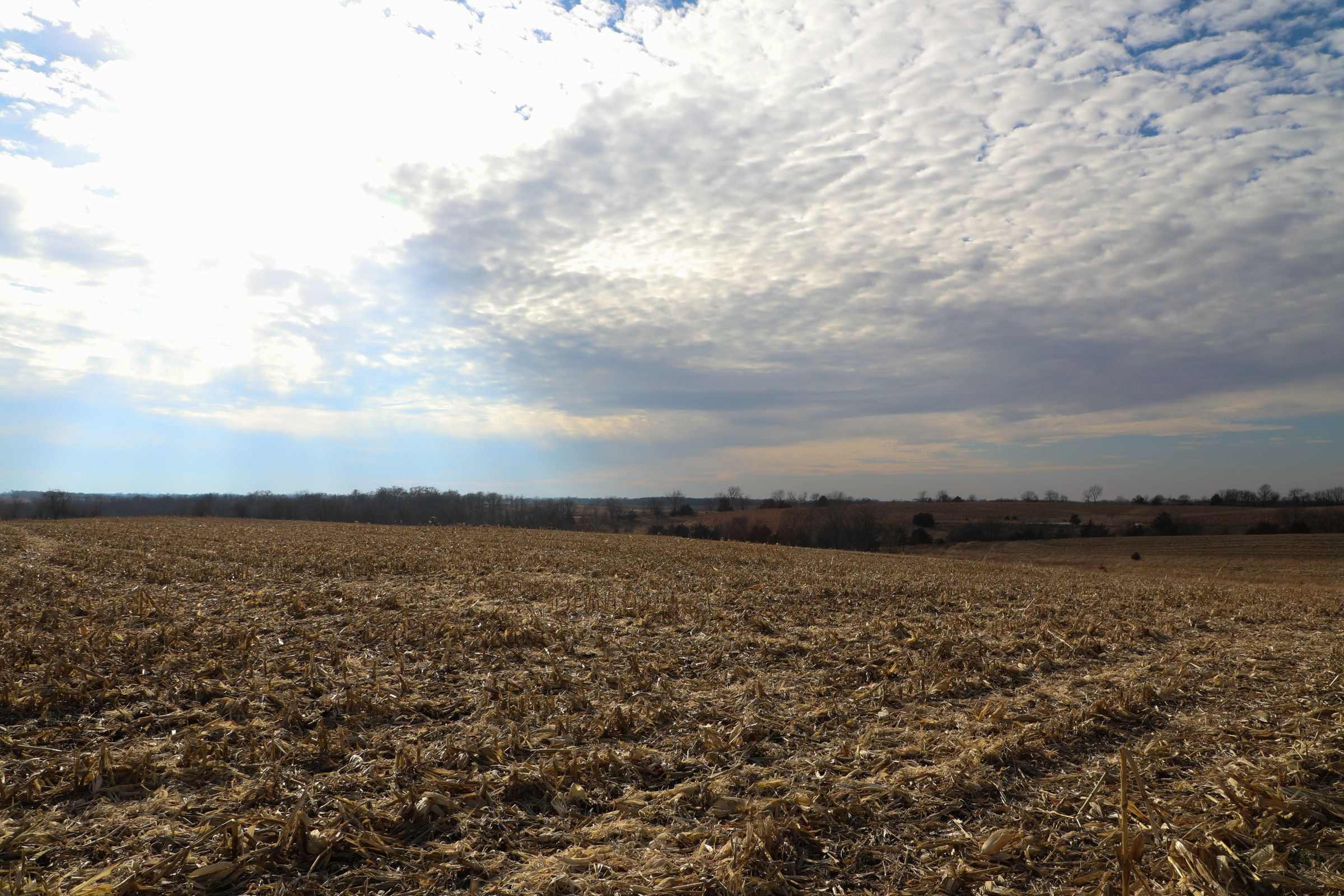 land-appanoose-county-iowa-37-acres-listing-number-15307-0-2020-12-24-154143.jpg
