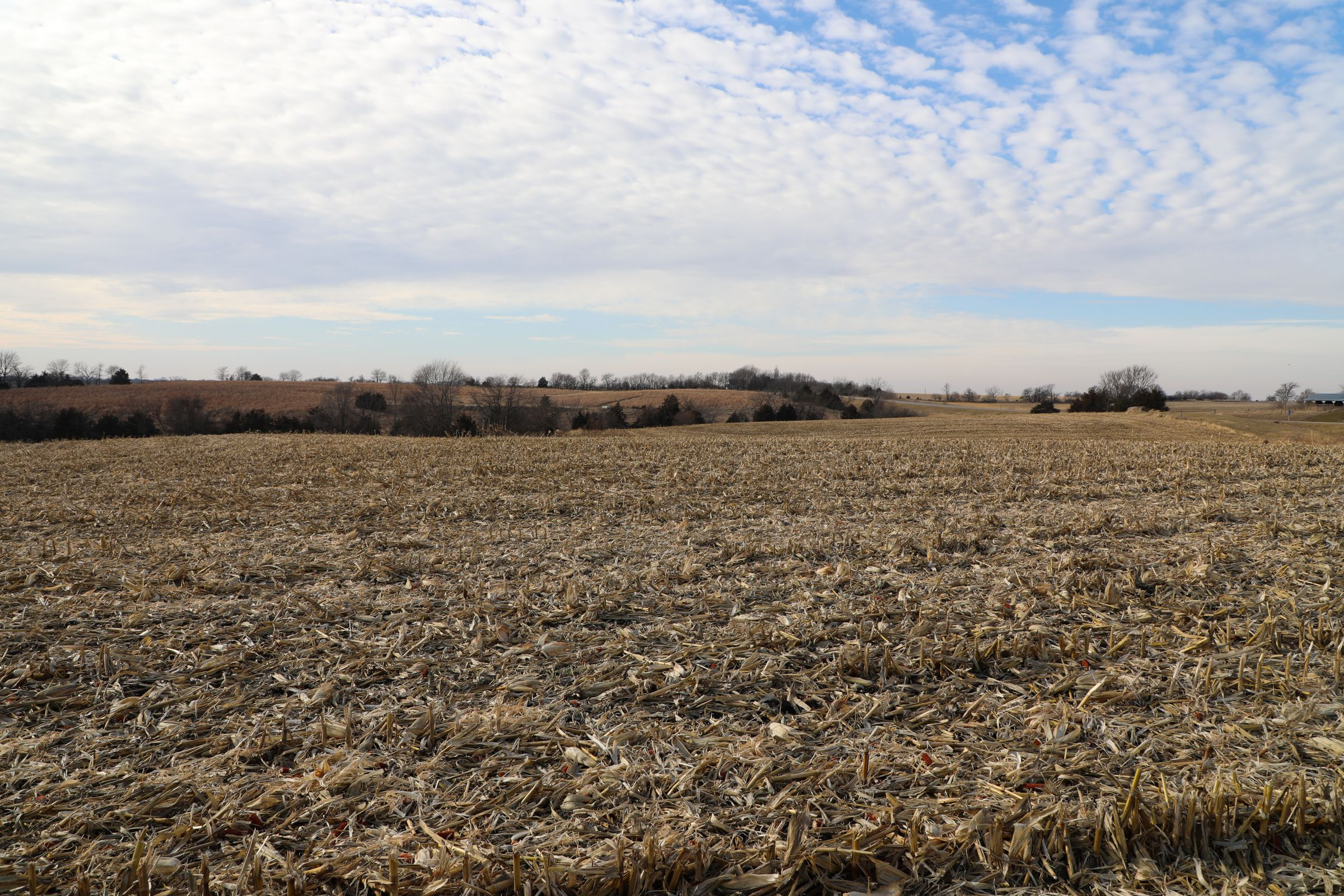 land-appanoose-county-iowa-37-acres-listing-number-15307-0-2020-12-24-154237.jpg