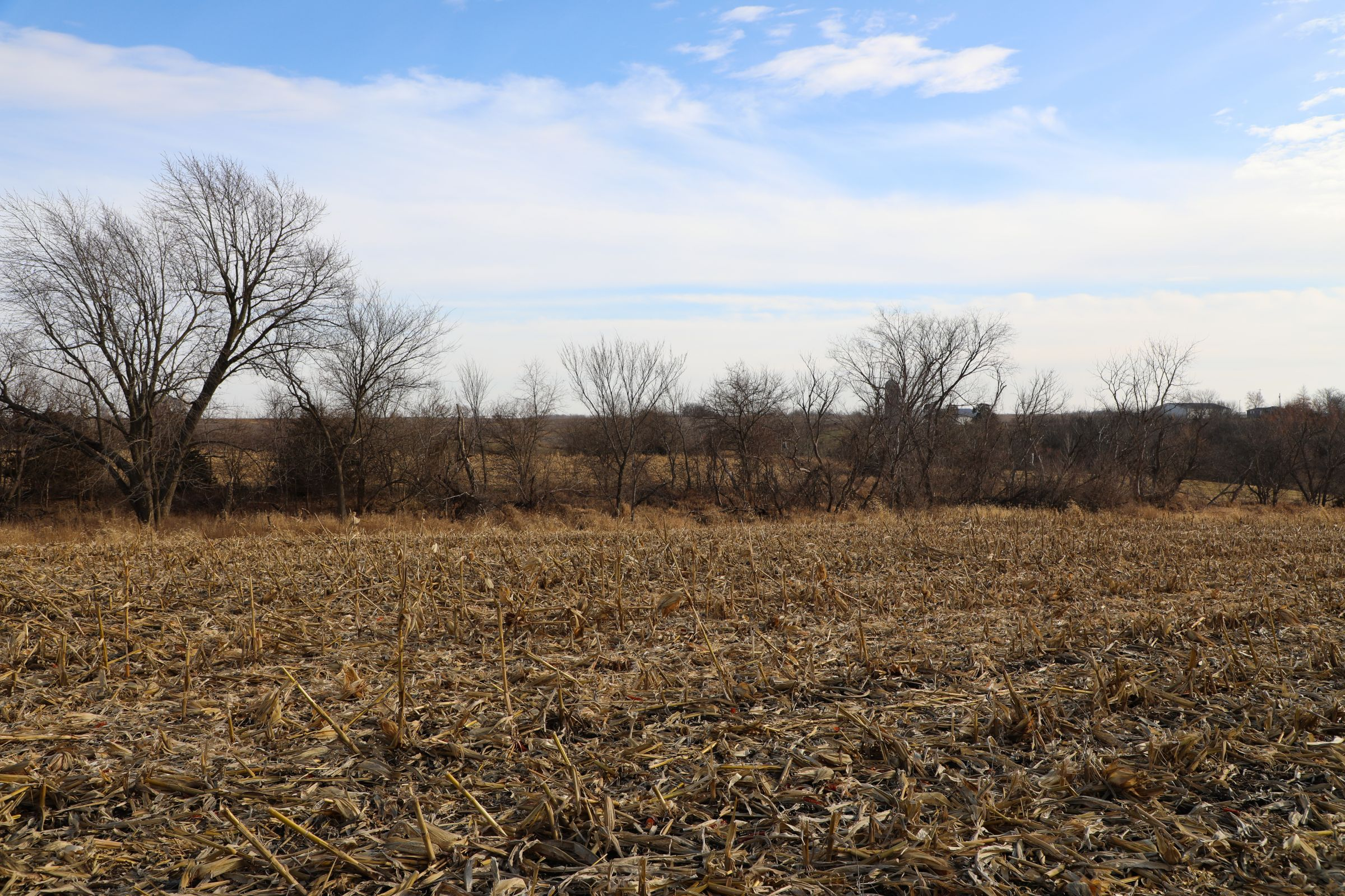 land-appanoose-county-iowa-37-acres-listing-number-15307-0-2020-12-24-154327.jpg