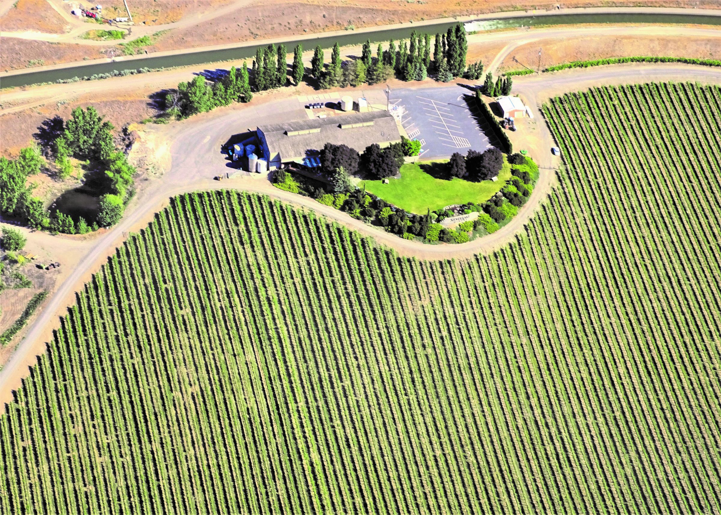 Winery Business Asset.jpg
