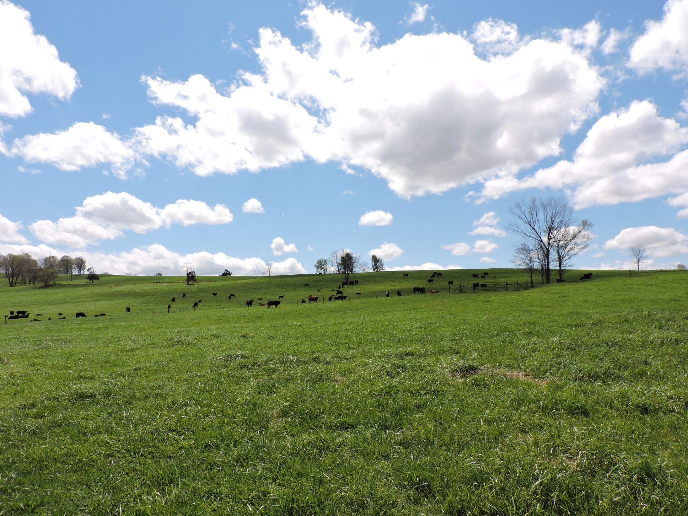 land-sharp-county-arkansas-695-acres-listing-number-15405-0-2021-04-13-213604.JPG