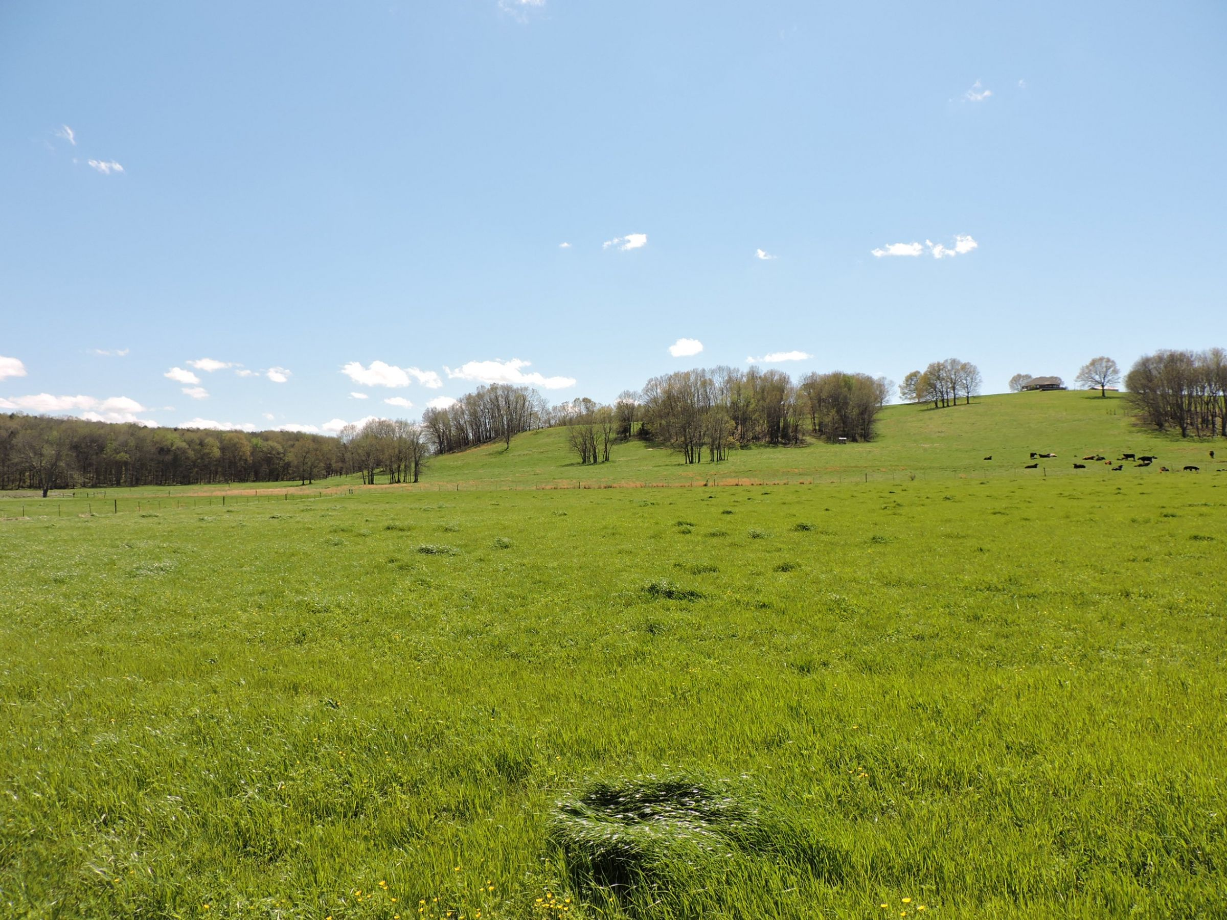 land-sharp-county-arkansas-695-acres-listing-number-15405-12-2021-04-13-213613.JPG