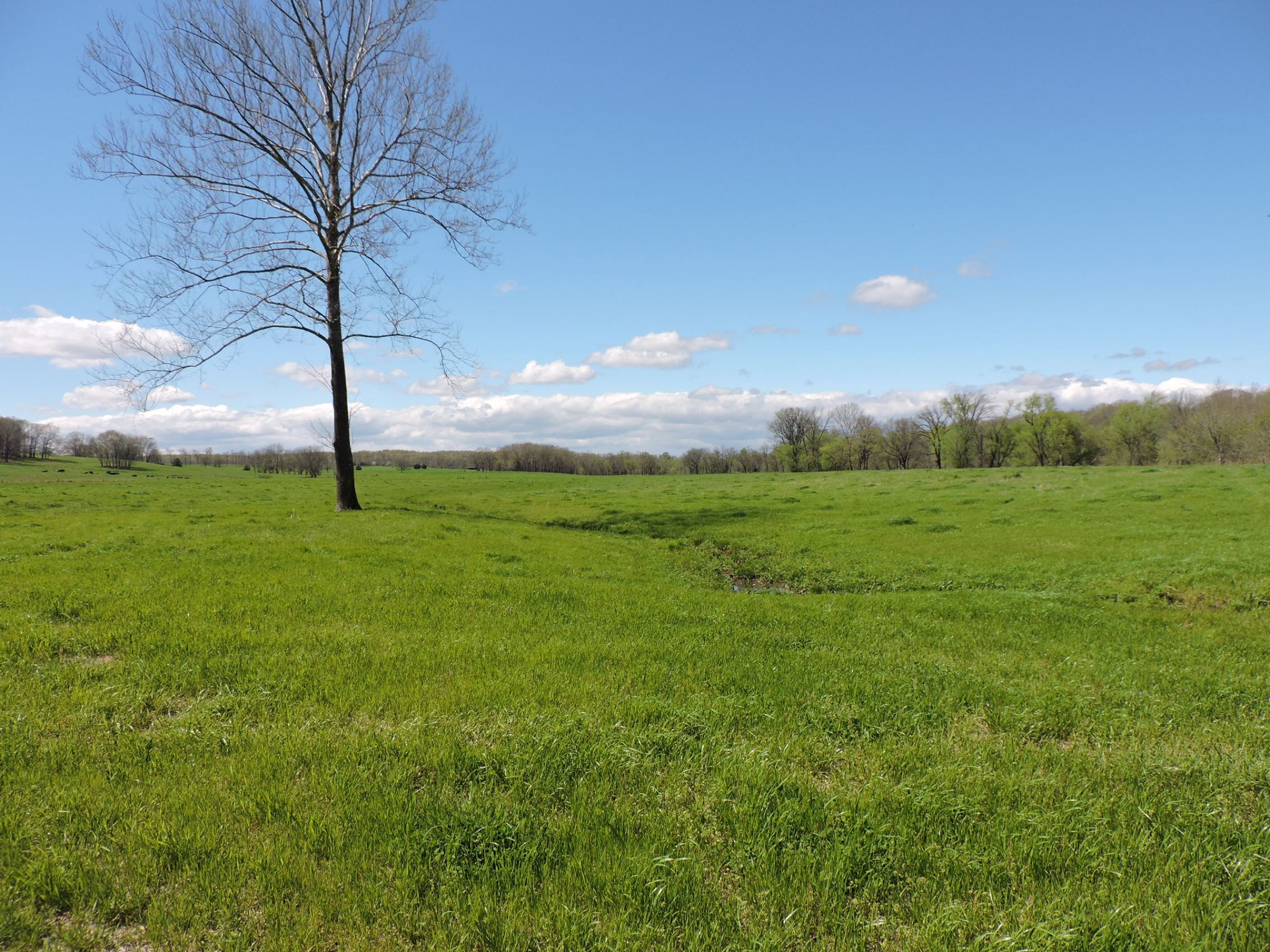 land-sharp-county-arkansas-695-acres-listing-number-15405-15-2021-04-13-213615.JPG