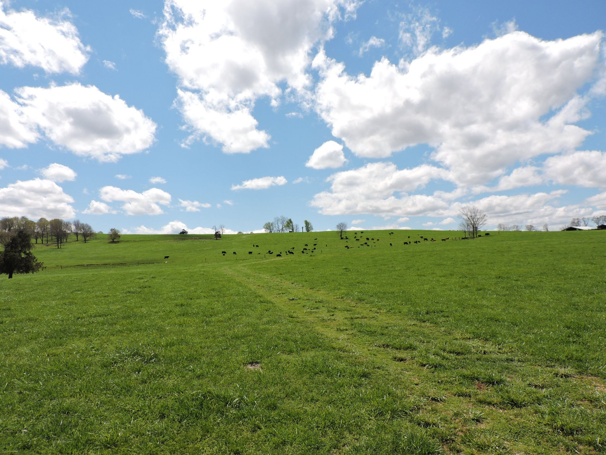land-sharp-county-arkansas-695-acres-listing-number-15405-7-2021-04-13-213609.JPG