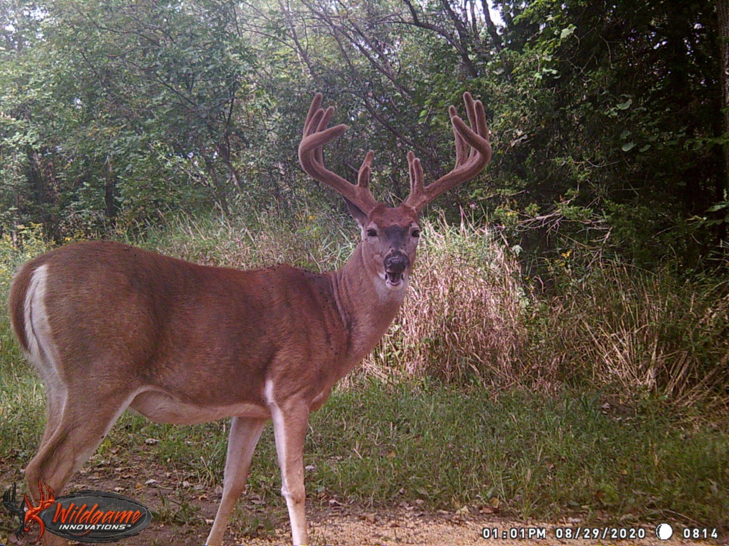 land-clarke-county-iowa-325-acres-listing-number-15416-1-2021-03-17-205902.jpeg