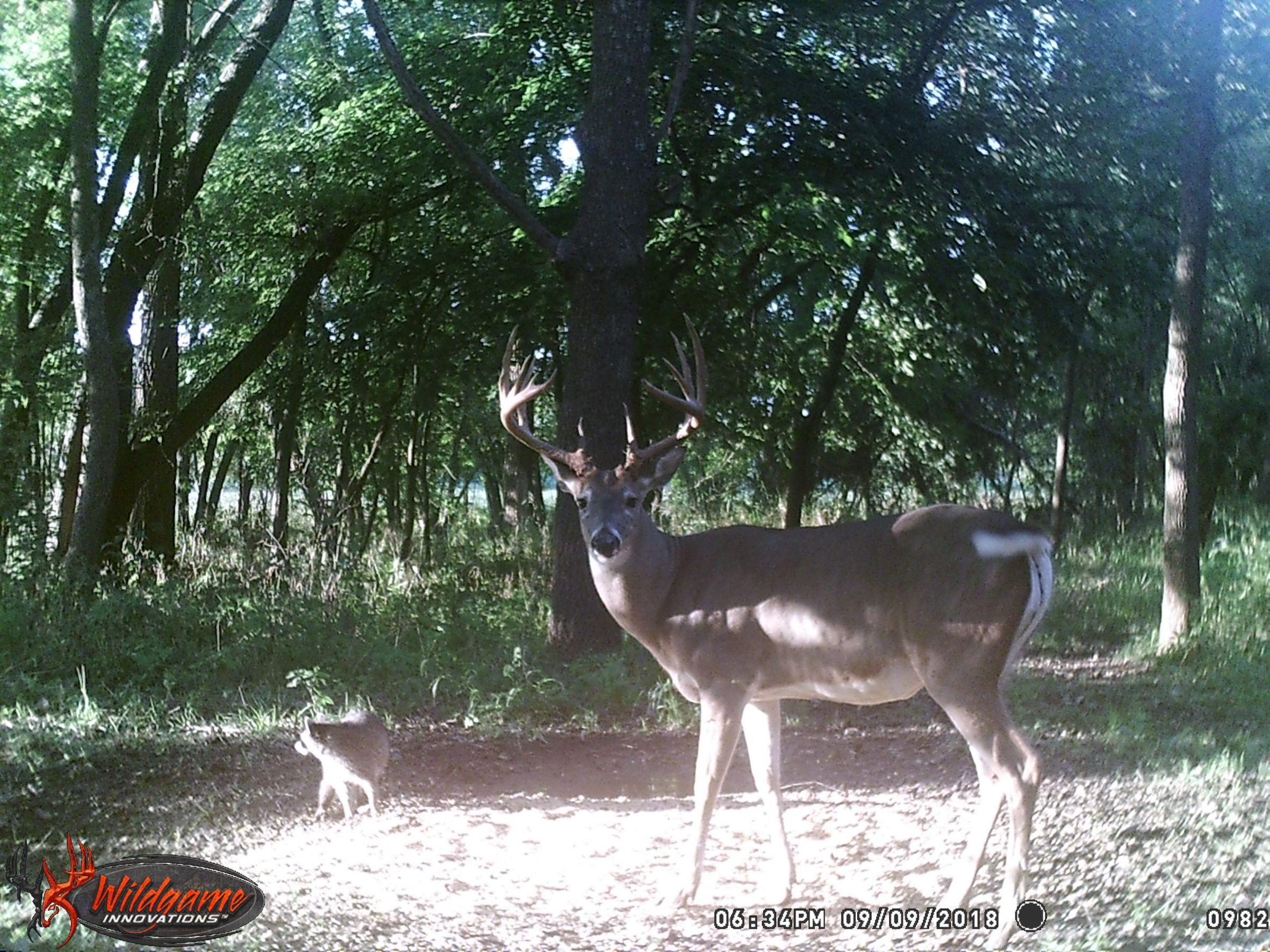 land-clarke-county-iowa-325-acres-listing-number-15416-10-2021-03-19-165619.JPG