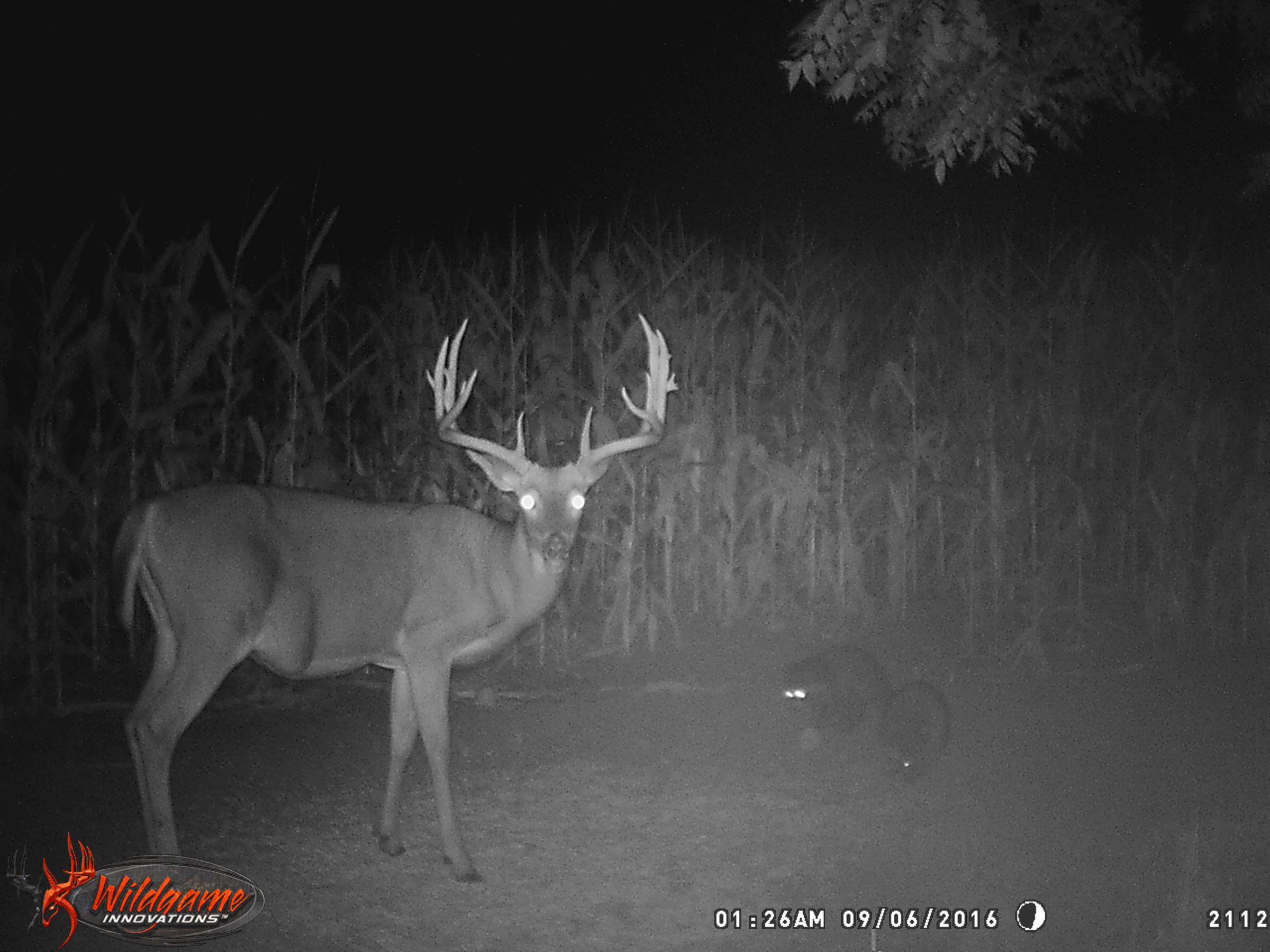 land-clarke-county-iowa-325-acres-listing-number-15416-12-2021-03-19-165620.jpg
