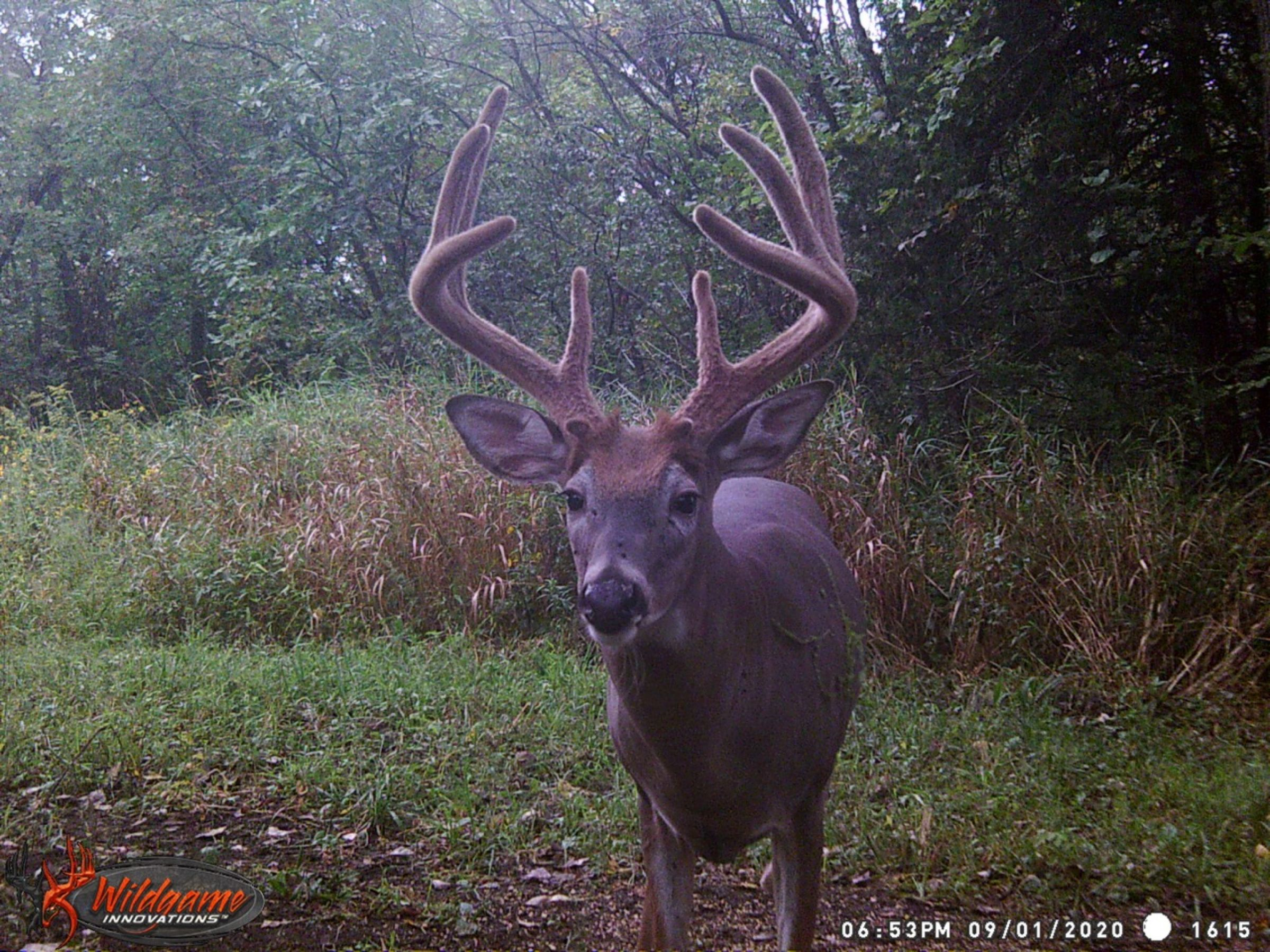 land-clarke-county-iowa-325-acres-listing-number-15416-2-2021-03-17-205902.jpeg