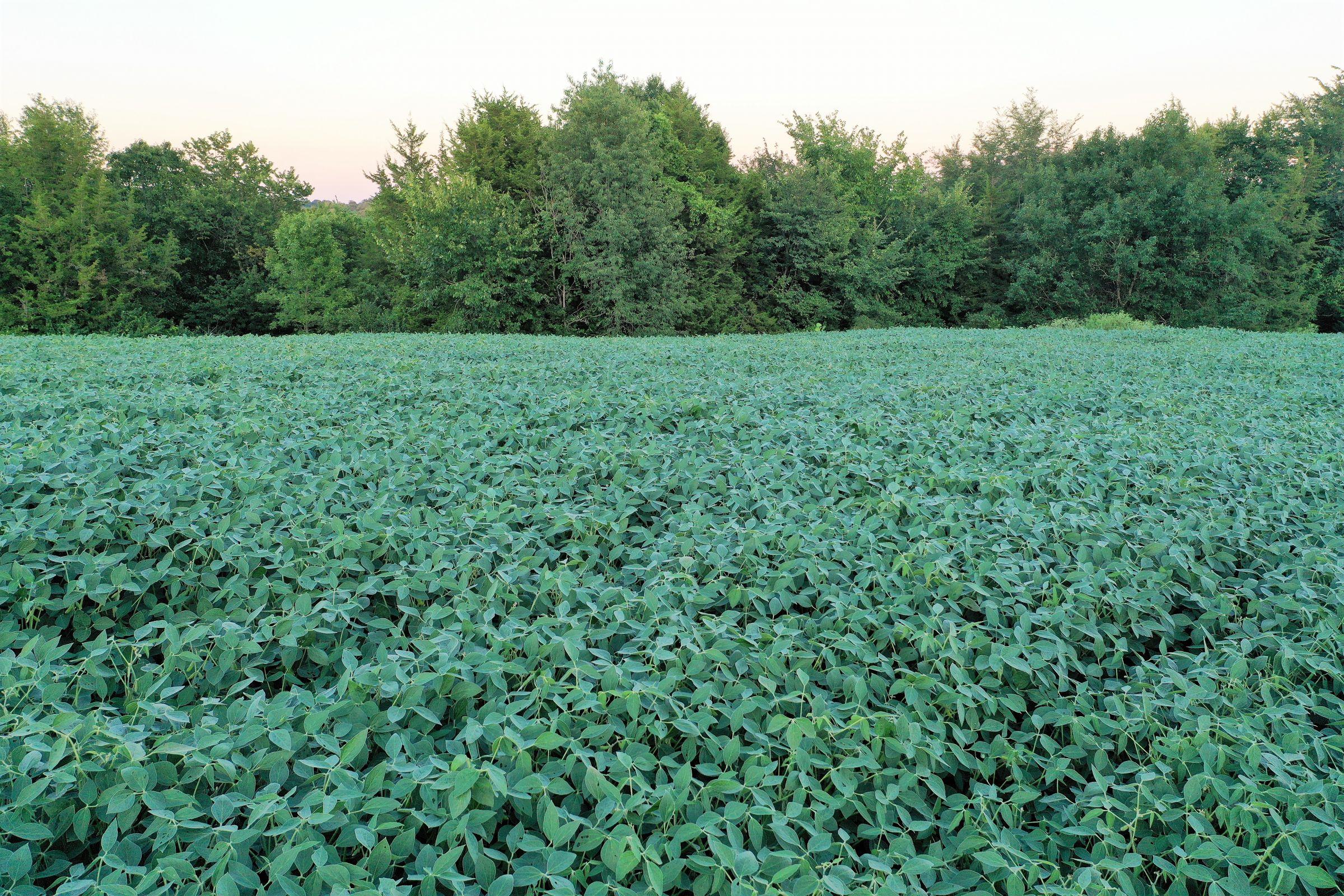 land-clarke-county-iowa-325-acres-listing-number-15416-7-2021-03-18-163322.JPG