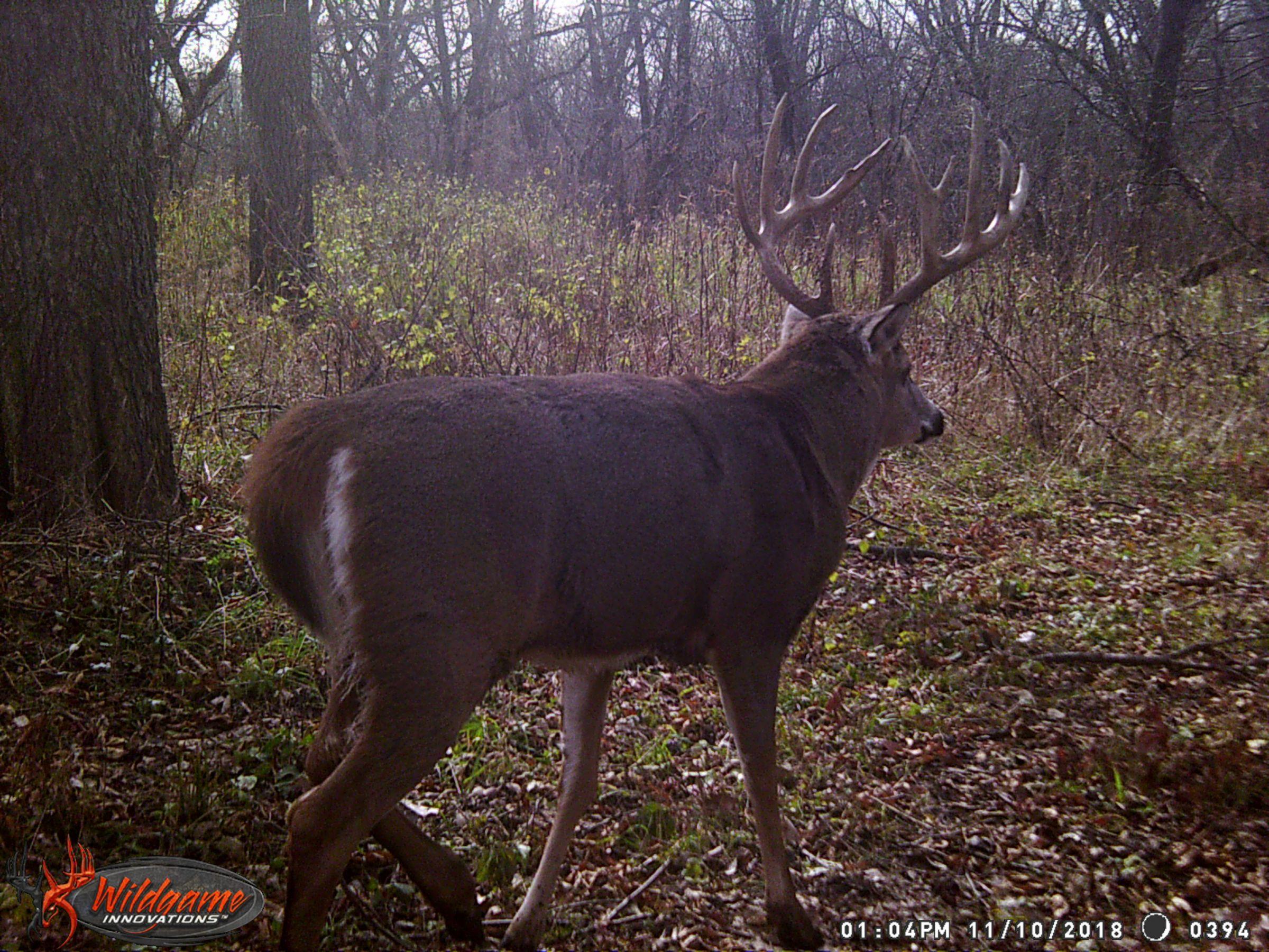 land-clarke-county-iowa-325-acres-listing-number-15416-7-2021-03-19-165616.JPG