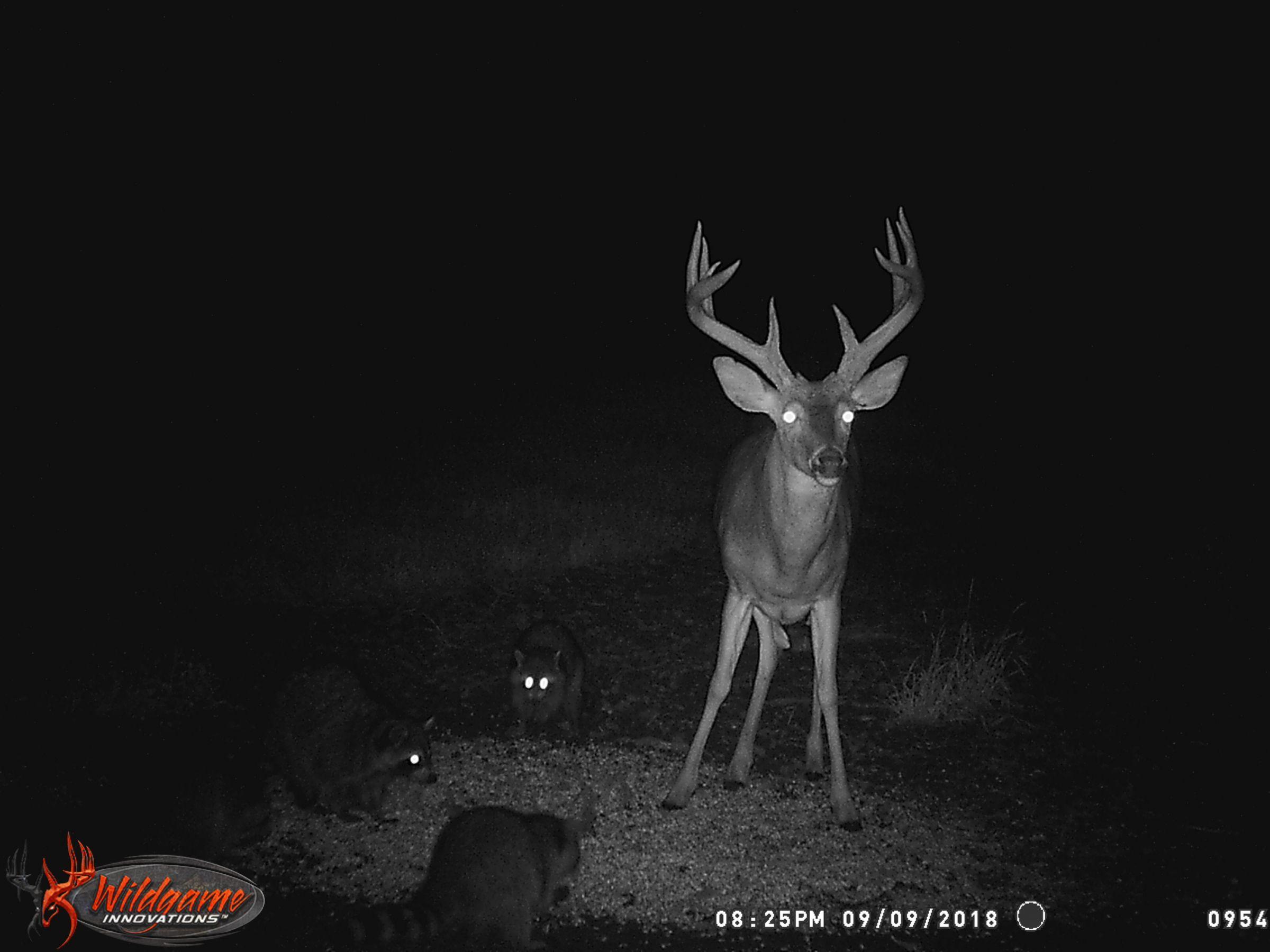 land-clarke-county-iowa-325-acres-listing-number-15416-9-2021-03-19-165618.JPG