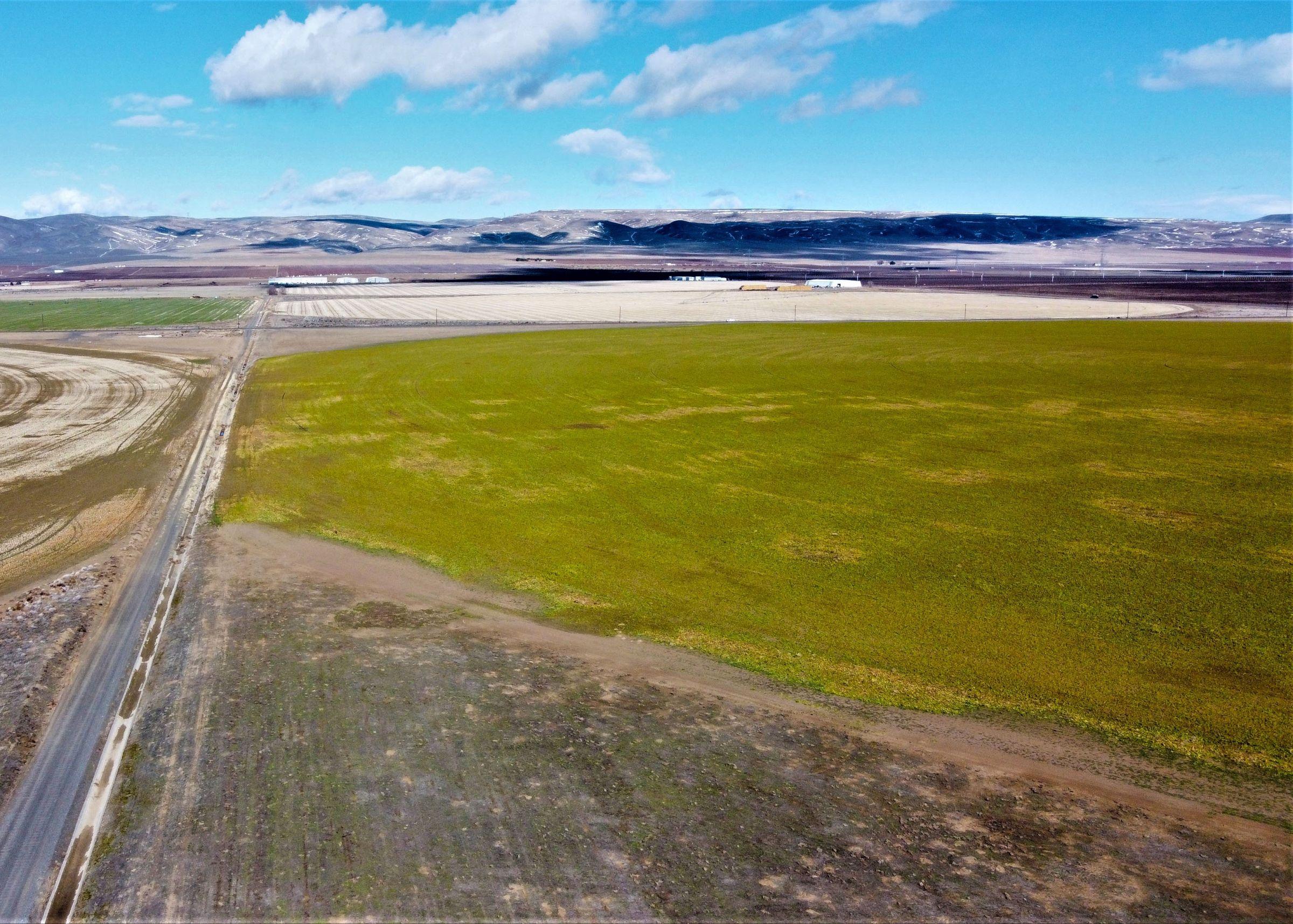 Mattawa Irrigated Farm Pic 5