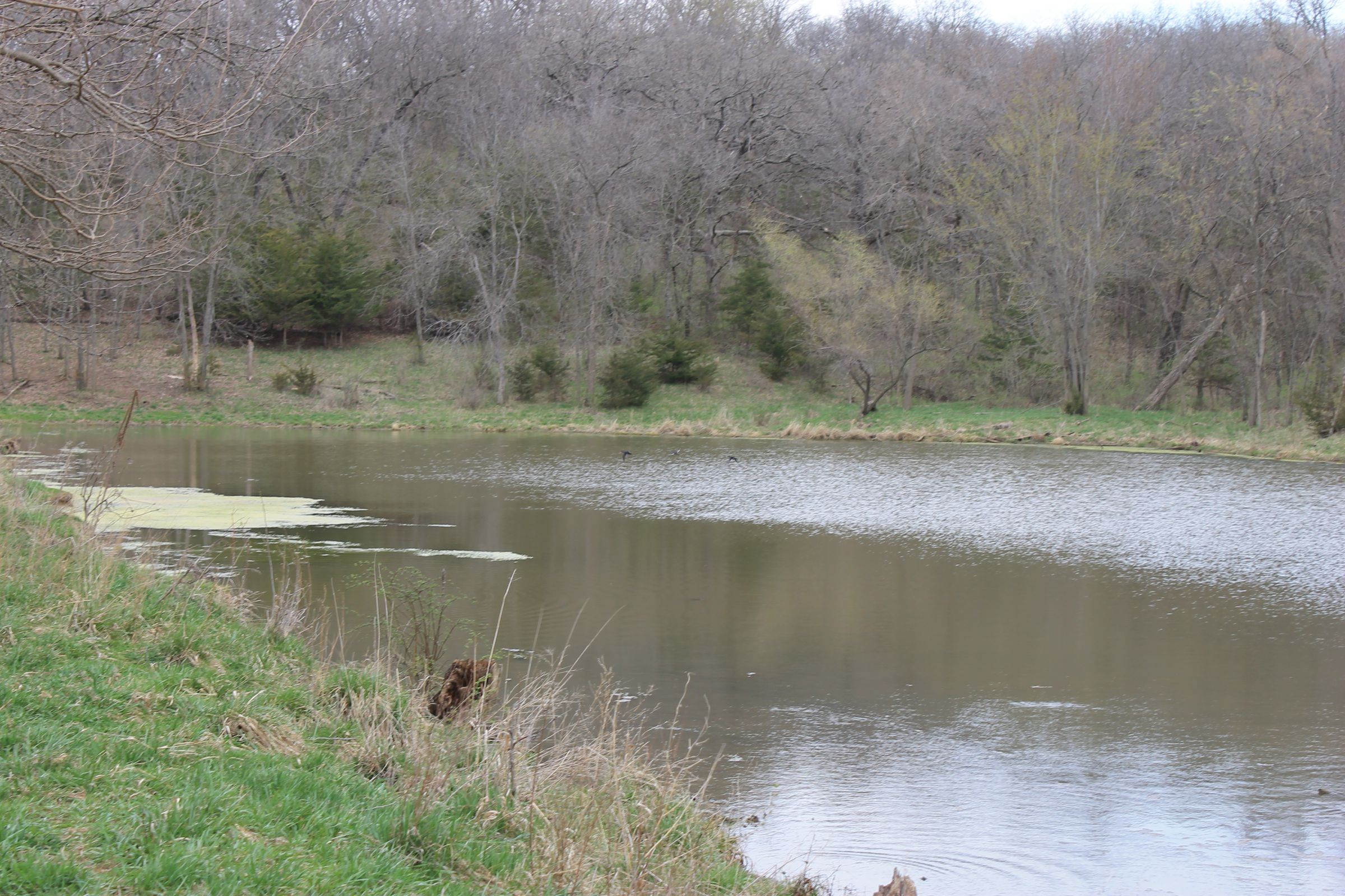 land-warren-county-iowa-186-acres-listing-number-15447-0-2021-04-09-154341.JPG