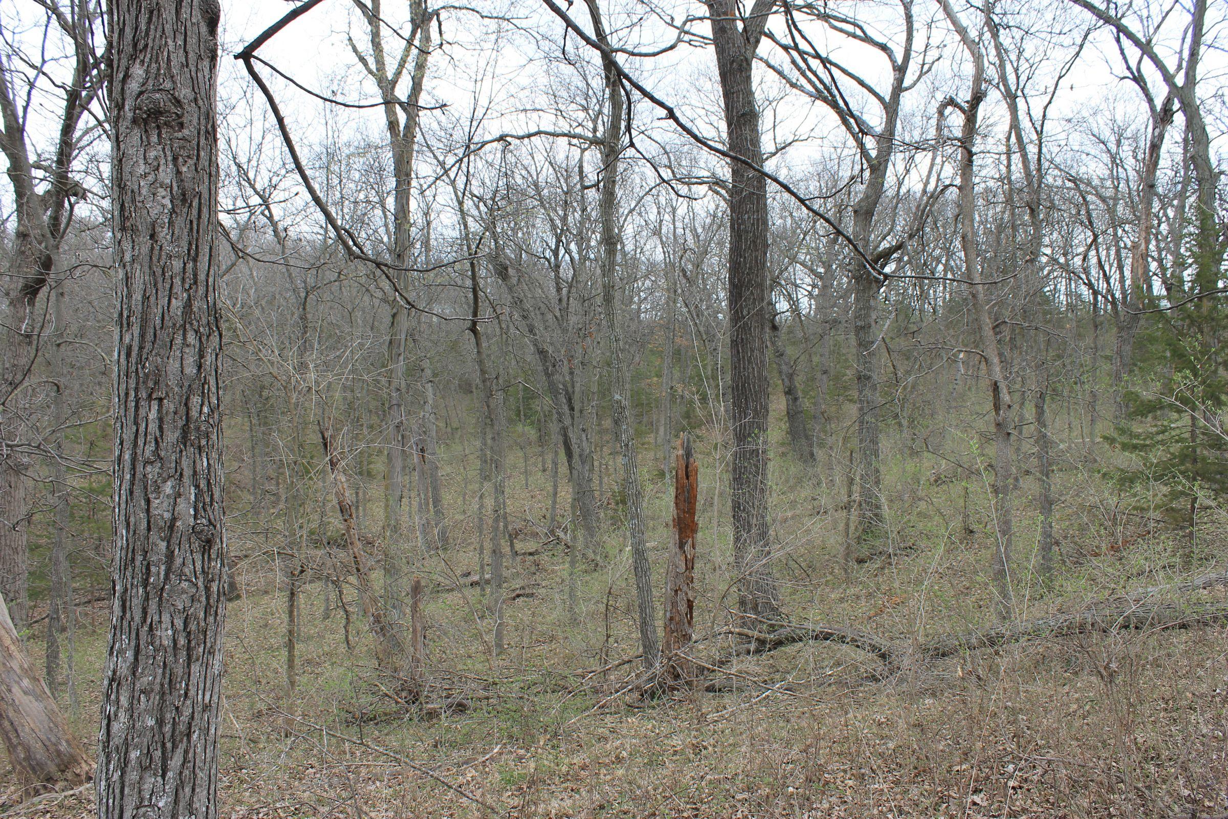 land-warren-county-iowa-186-acres-listing-number-15447-2-2021-04-09-154344.JPG