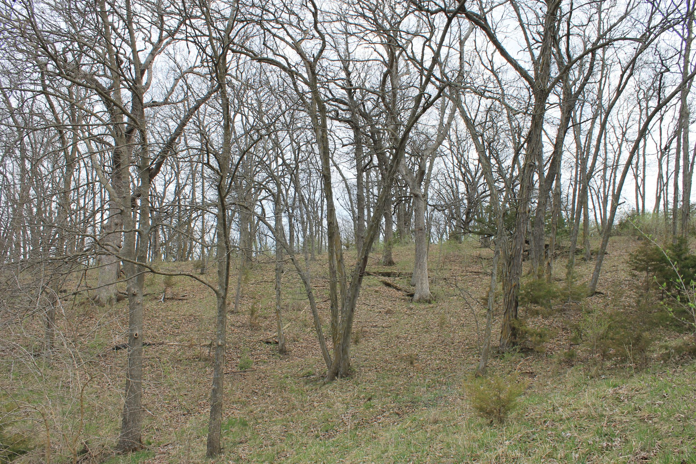 land-warren-county-iowa-186-acres-listing-number-15447-3-2021-04-09-153304.JPG