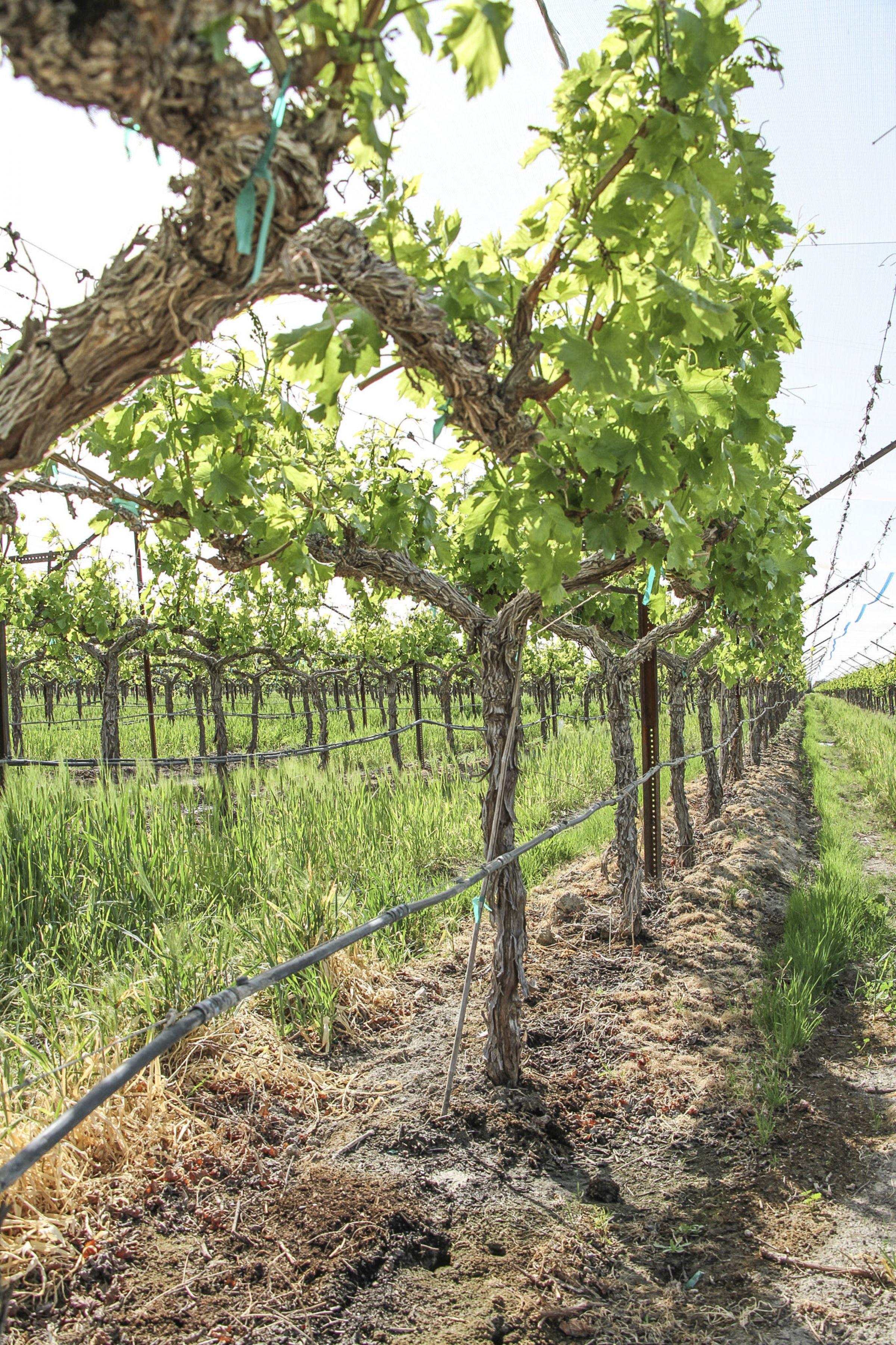 land-riverside-county-california-1669-acres-listing-number-15465-0-2021-06-16-001015.jpg