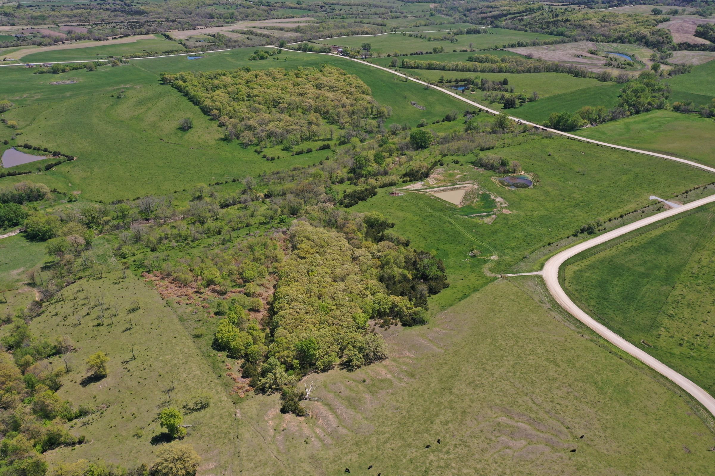 land-decatur-county-iowa-99-acres-listing-number-15525-3-2021-05-14-173510.JPG