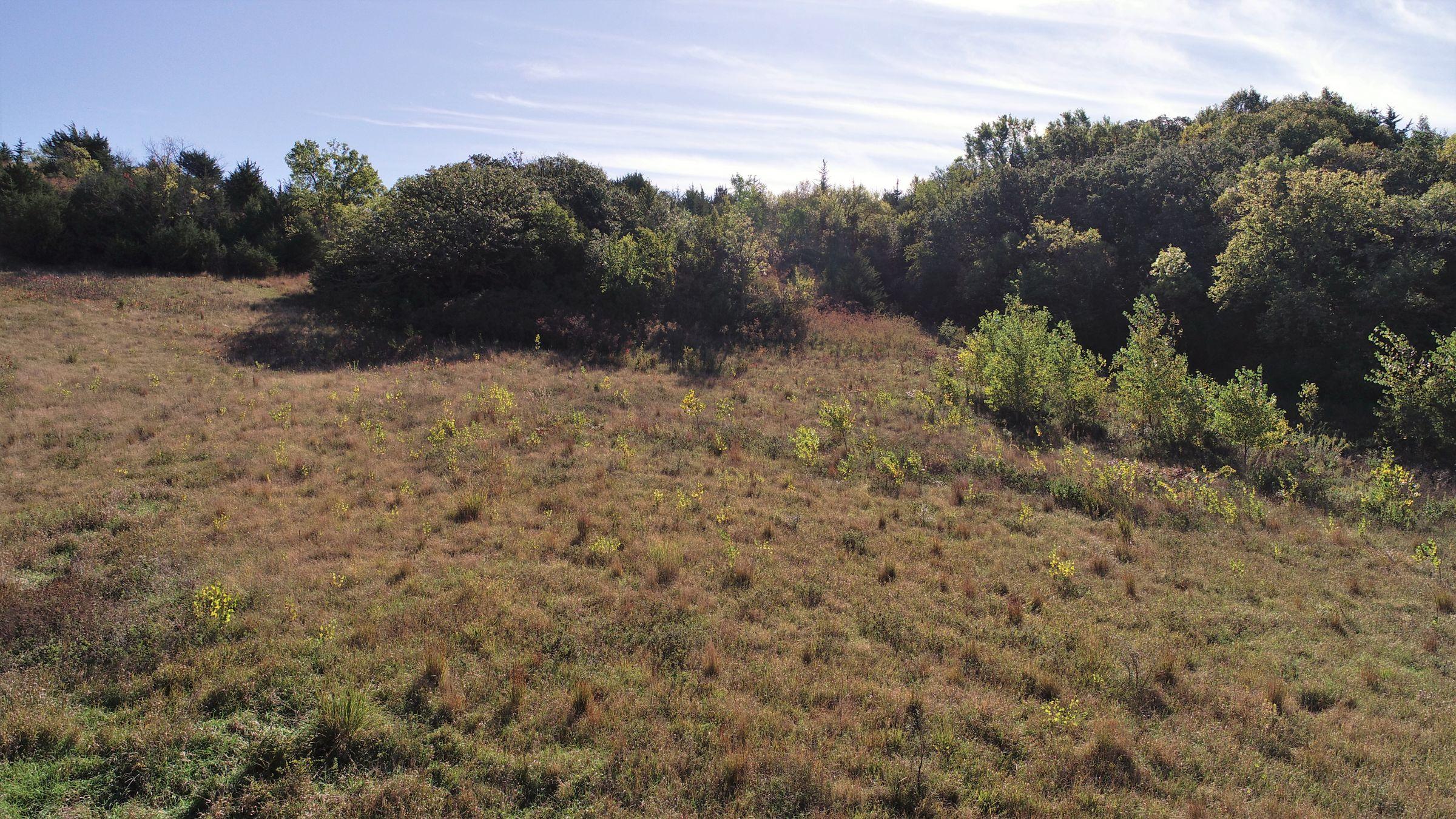 land-harrison-county-iowa-59-acres-listing-number-15527-0-2021-05-21-212721.JPG