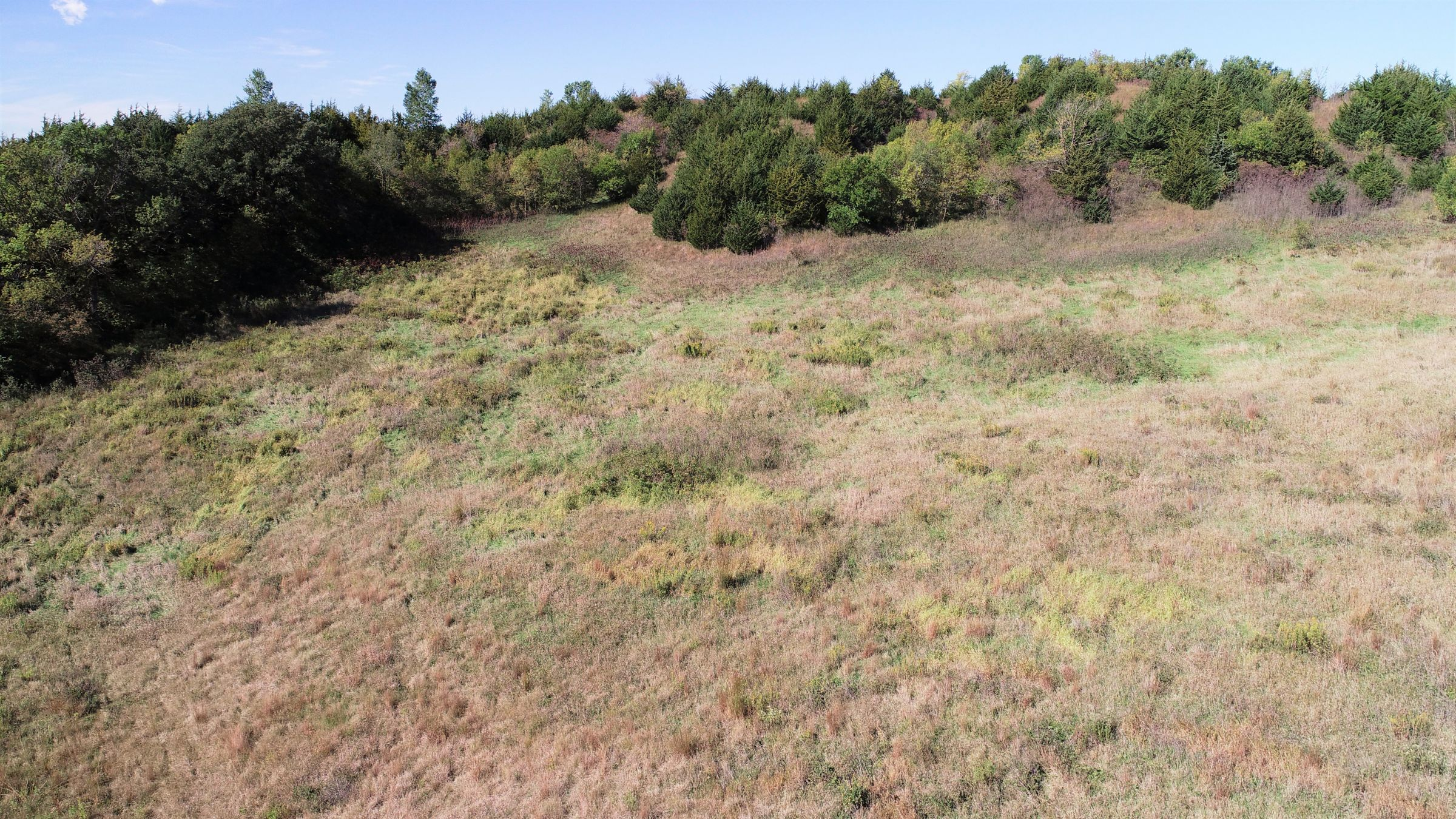 land-harrison-county-iowa-59-acres-listing-number-15527-3-2021-05-21-212628.JPG