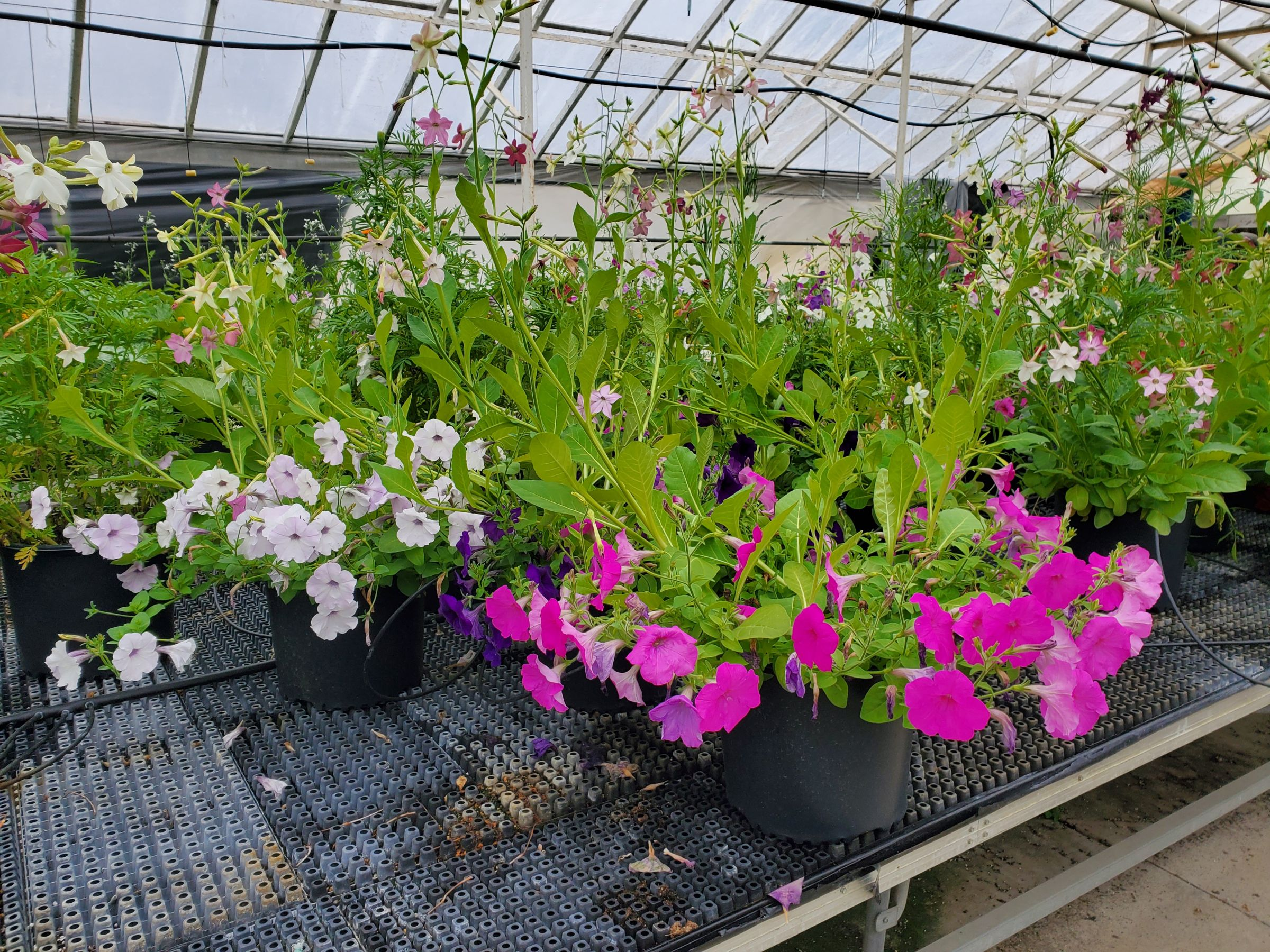 Boone County Iowa Greenhouse Complex Auction
