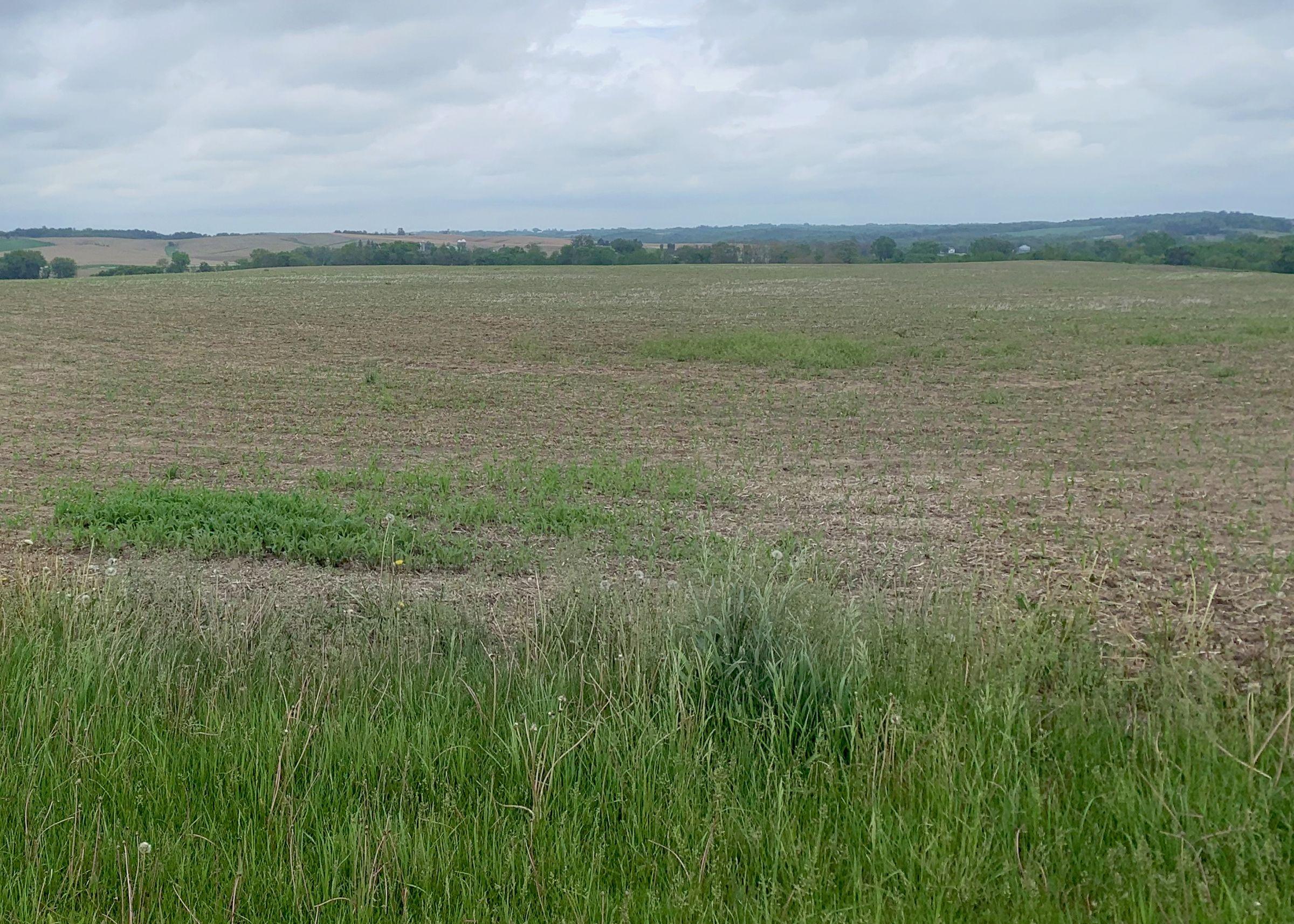 land-jackson-county-iowa-42-acres-listing-number-15535-3-2021-05-27-193622.jpg