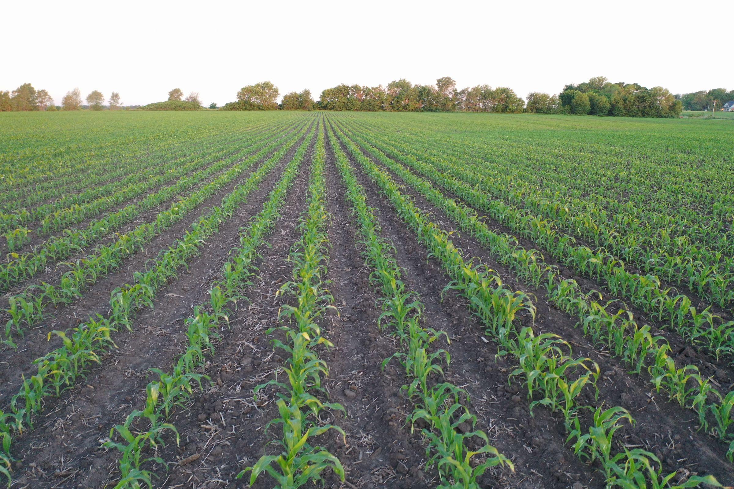 Marion County Iowa Farmland For Sale Auction