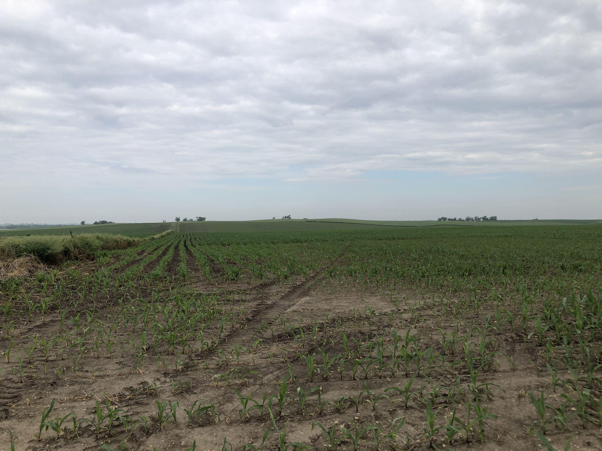 iowa-0-acres-listing-number-15569-0-2021-06-08-144649.jpg