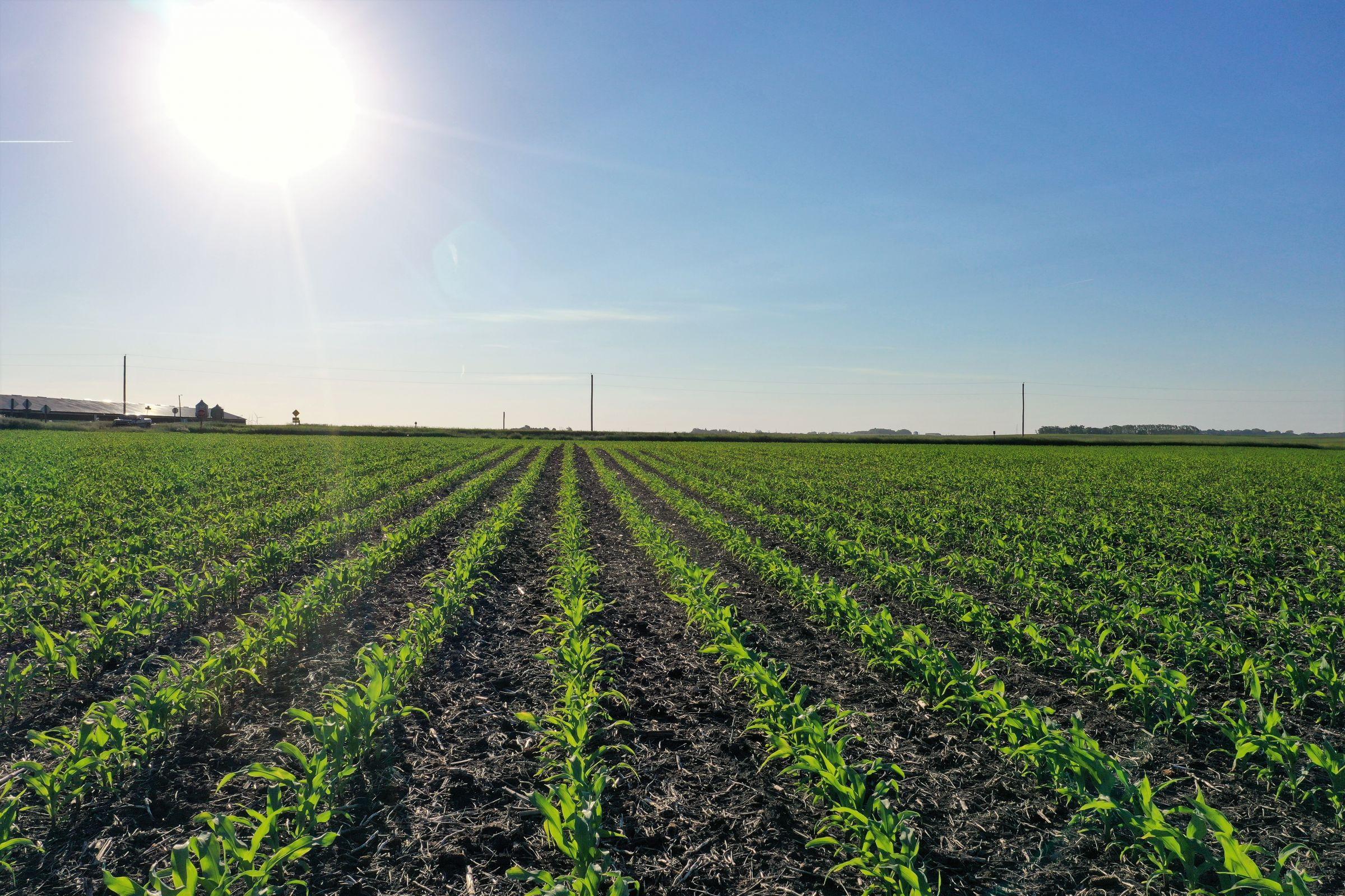 land-calhoun-county-iowa-80-acres-listing-number-15571-0-2021-06-09-140313.JPG