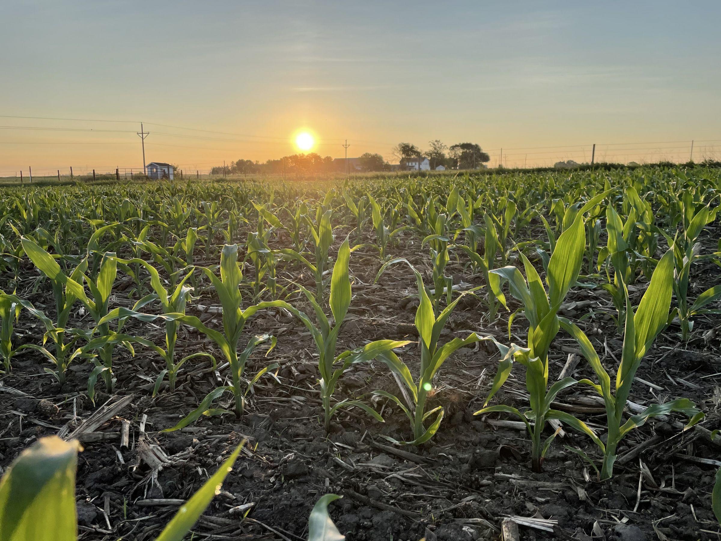 land-buchanan-county-iowa-68-acres-listing-number-15572-3-2021-06-10-145608.JPG